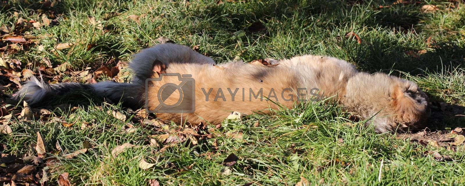 picture of a Poisoned dog on a grass in november morning. Save animals concept.