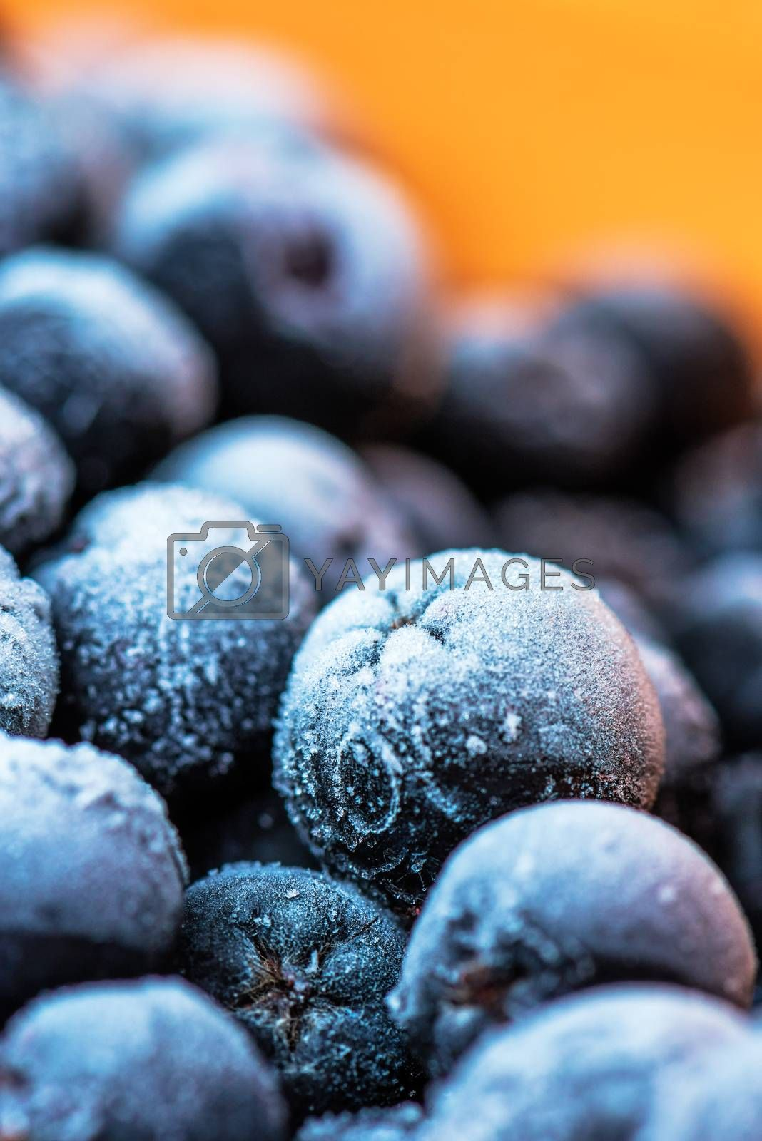 Frozen aronia chokeberry berries in a bowl, powerful antioxidant fruit