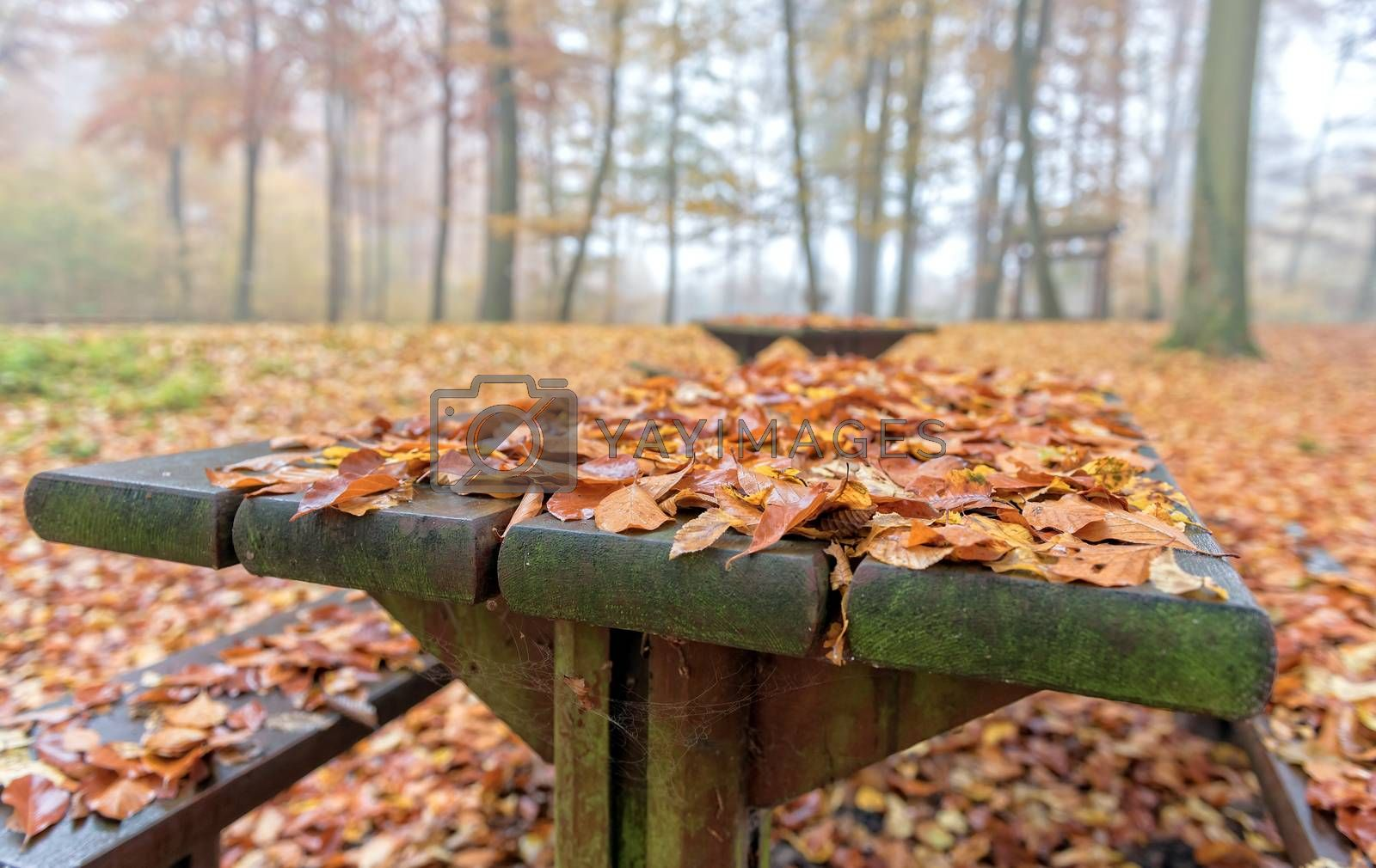 a wood table in the forest covered with dead leaves