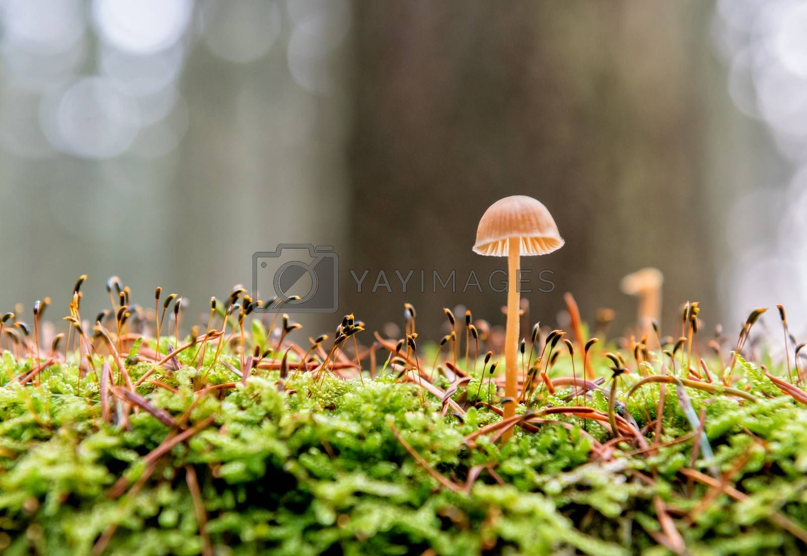 little mushroom in the forest