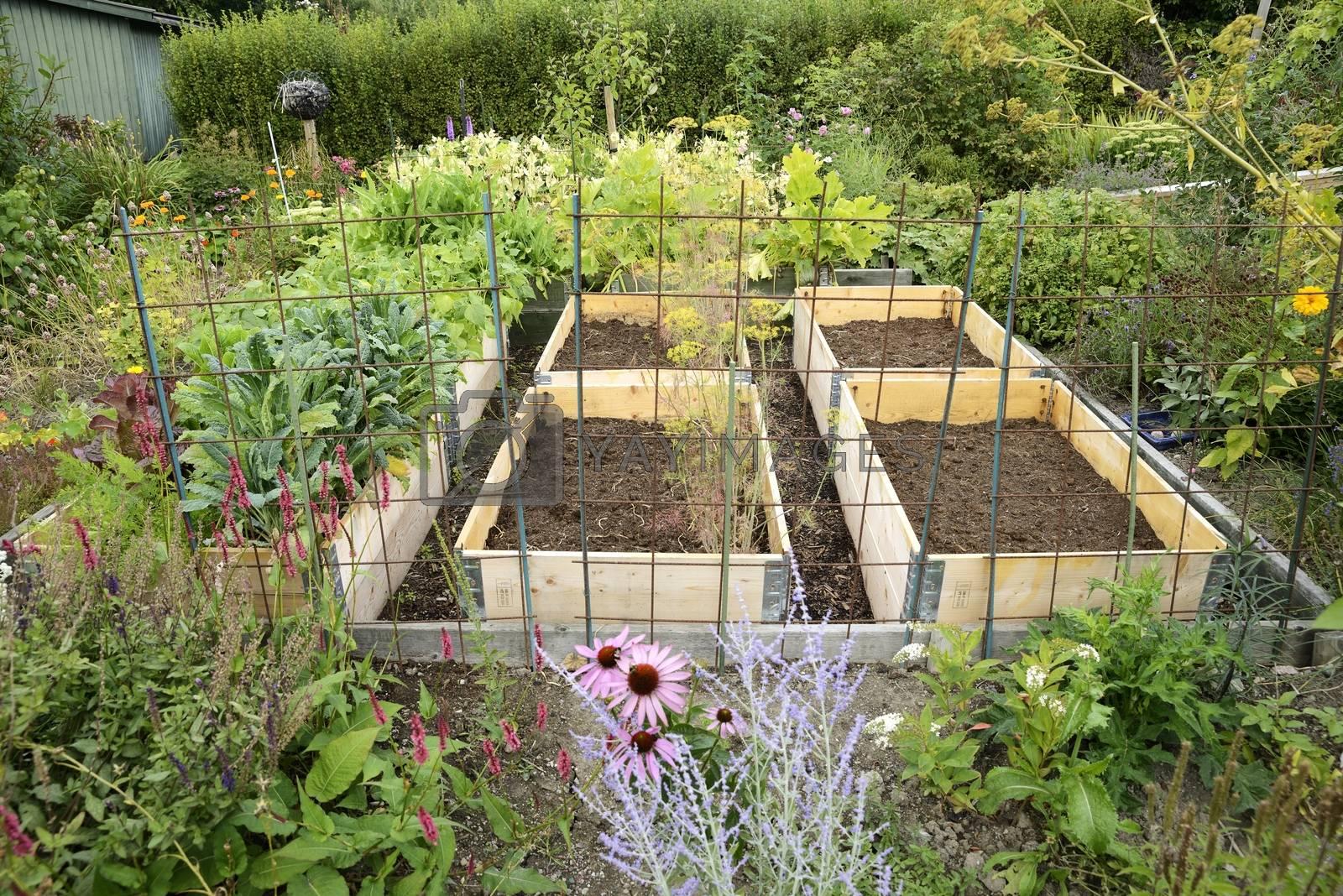 Organic Gardening on the Allotment.