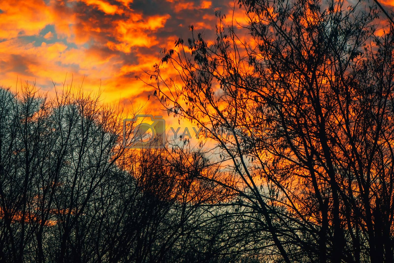 Orange clouds in winter sunset through bare tree branches, beauty in nature