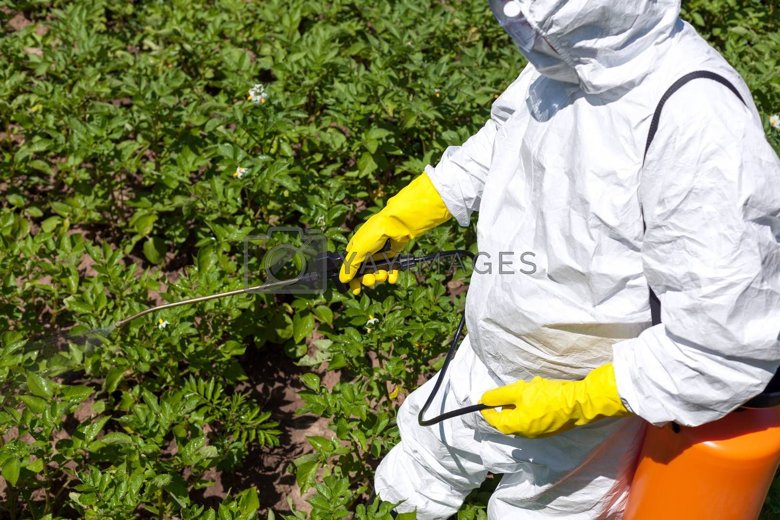 Man spraying toxic pesticides or insecticides in the vegetable garden