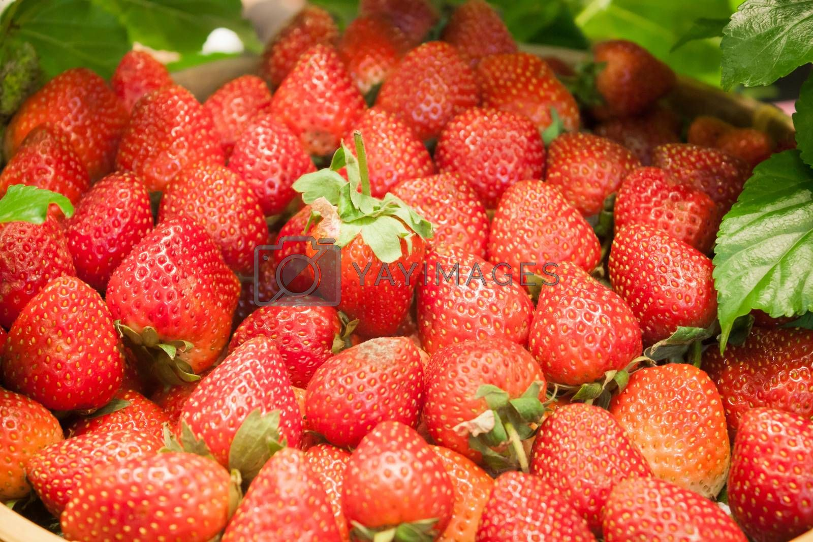 Background of freshly harvested strawberries by punsayaporn