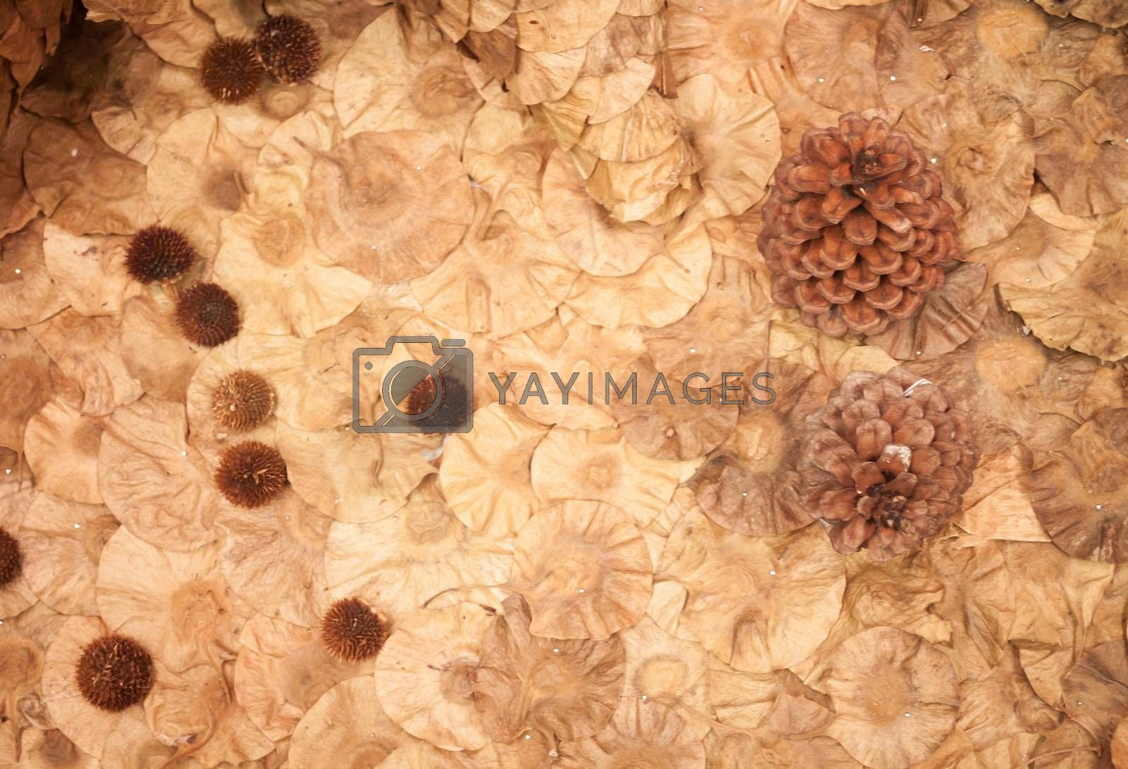Abstract background of imitation beautiful flower , stock photo