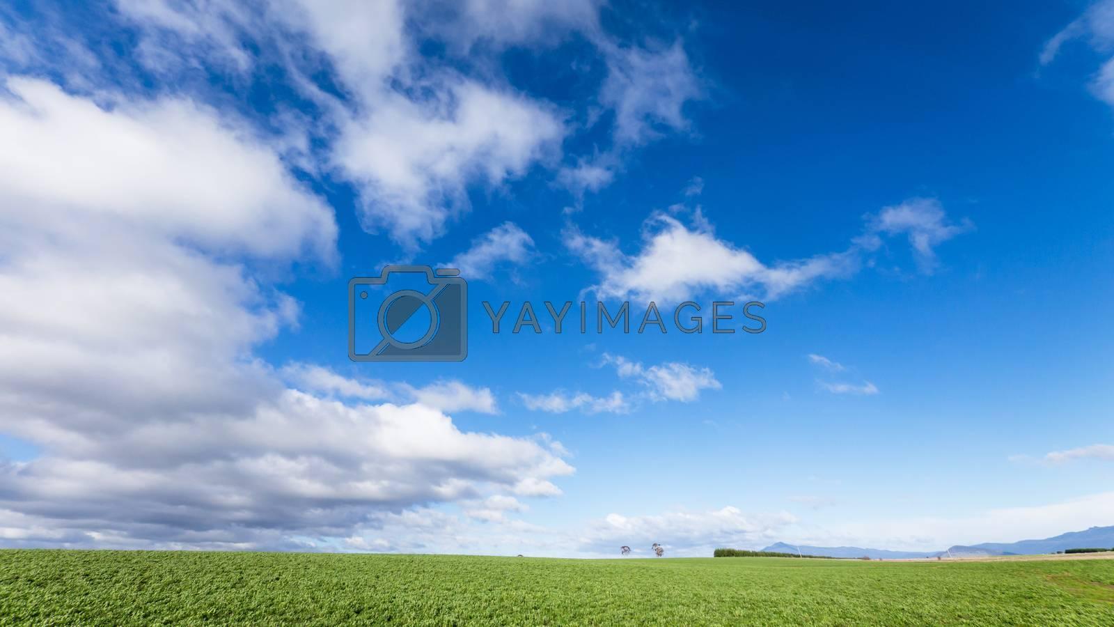 Green fields and blue sky at Tasmania, Australia