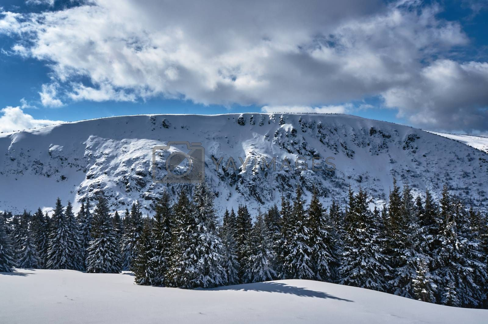 Winter landscape on a sunny day in the Giant Mountains in Poland