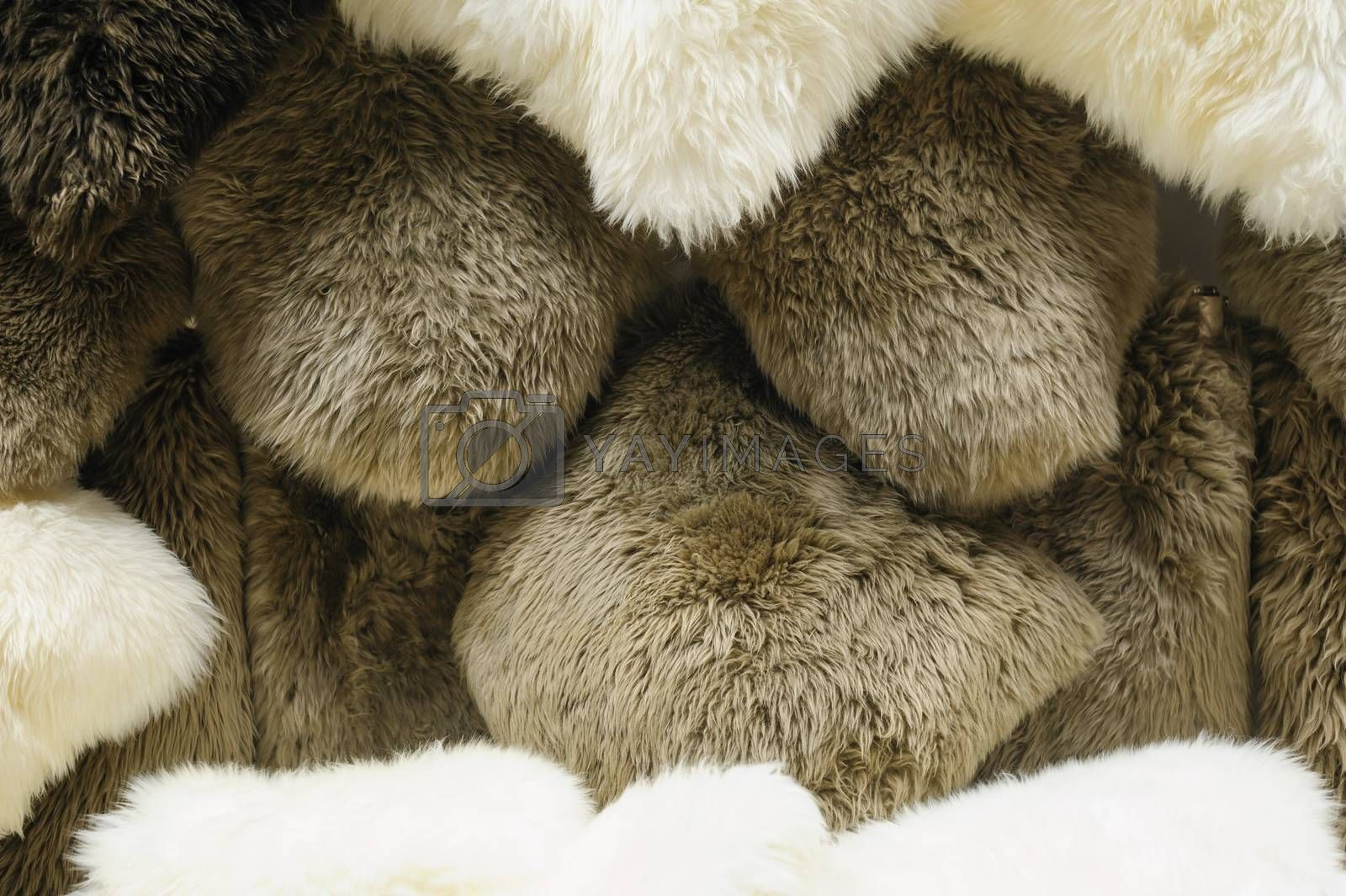texture of white and grey fur animals and place for text