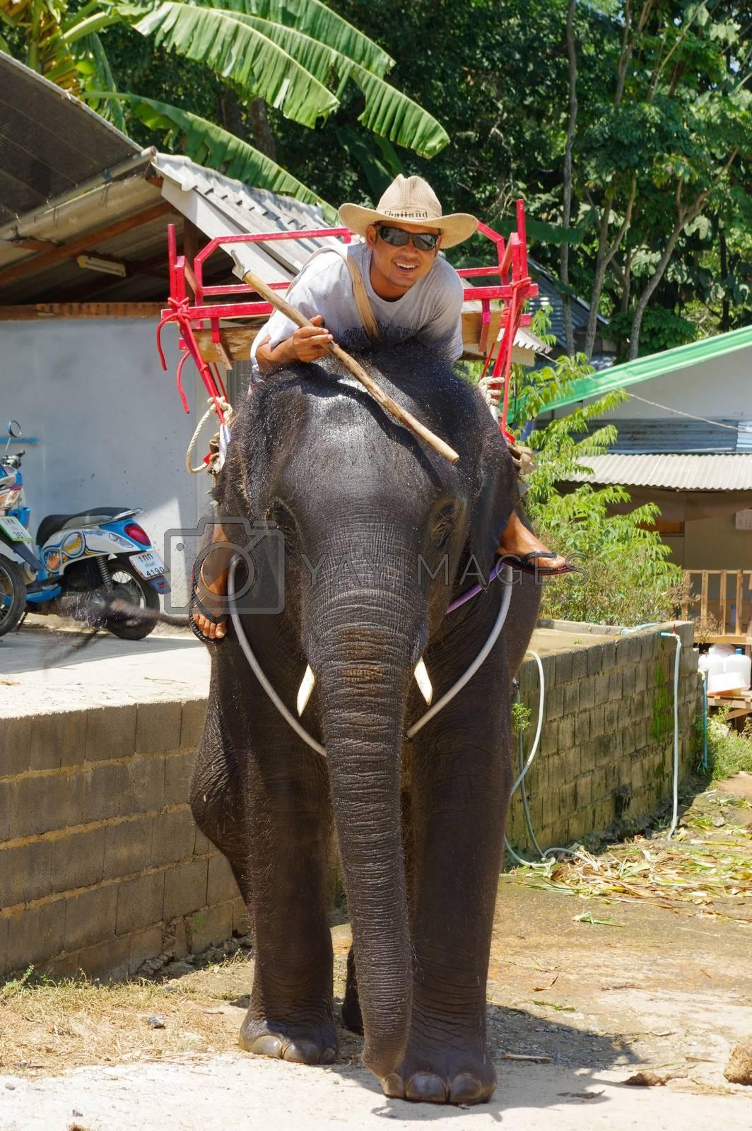 a man riding on elephant on Phuket Island in Thailand