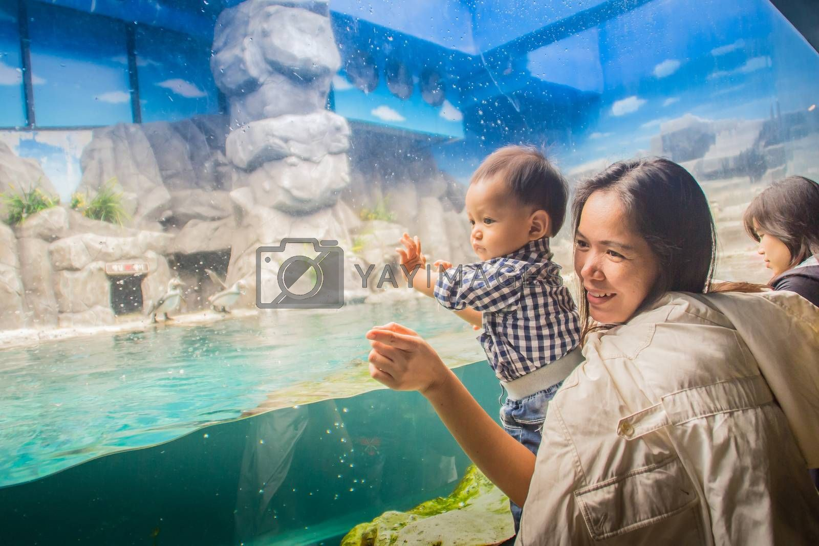 Jeju Island, Korea - November 13, 2016 : The tourist visited Hanwah Aqua Planet Jeju, located nearby Seopjikoji and offers versitle features, including an aquarium as the main attraction, Marine Science, Kiz Planet and many more convenience facilities.