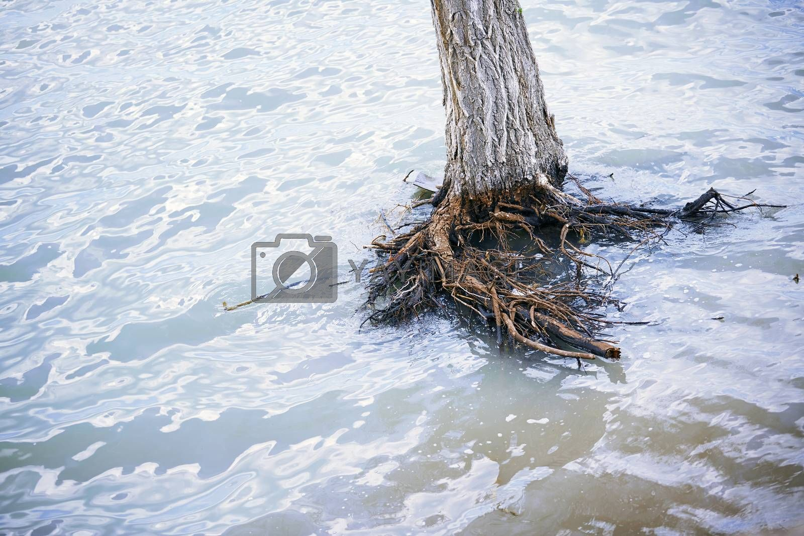 Dead tree in water during flood. Horizontal photo