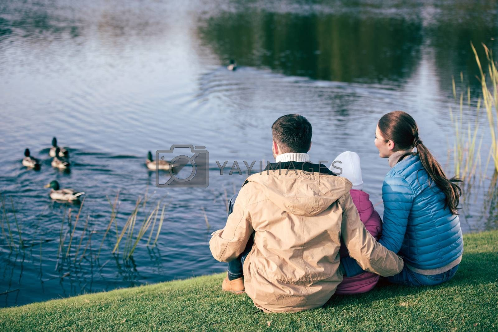 Back view of young family sitting embracing on green grass and looking at lake with ducks