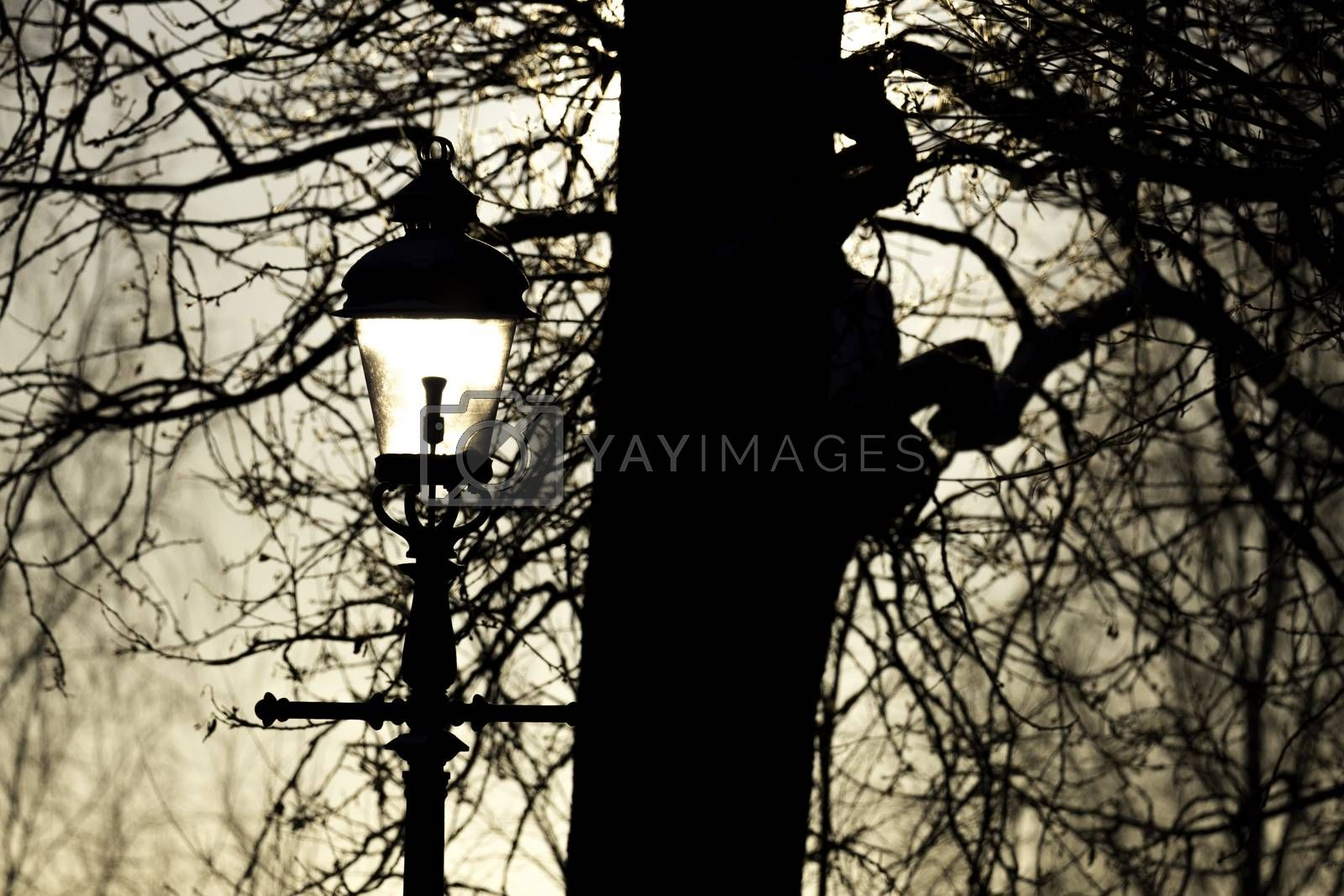 Sun Shining into Streetlight by Emmoth