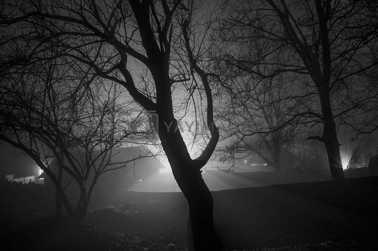 strange light in a dark forest at night, spooky foggy landscape of trees silhouettes with light behind, mytical concept