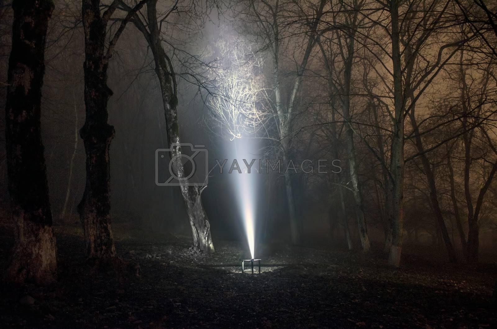 surreal light in dark forest, Magic fantasy lightsin the fairy tale foggy forest