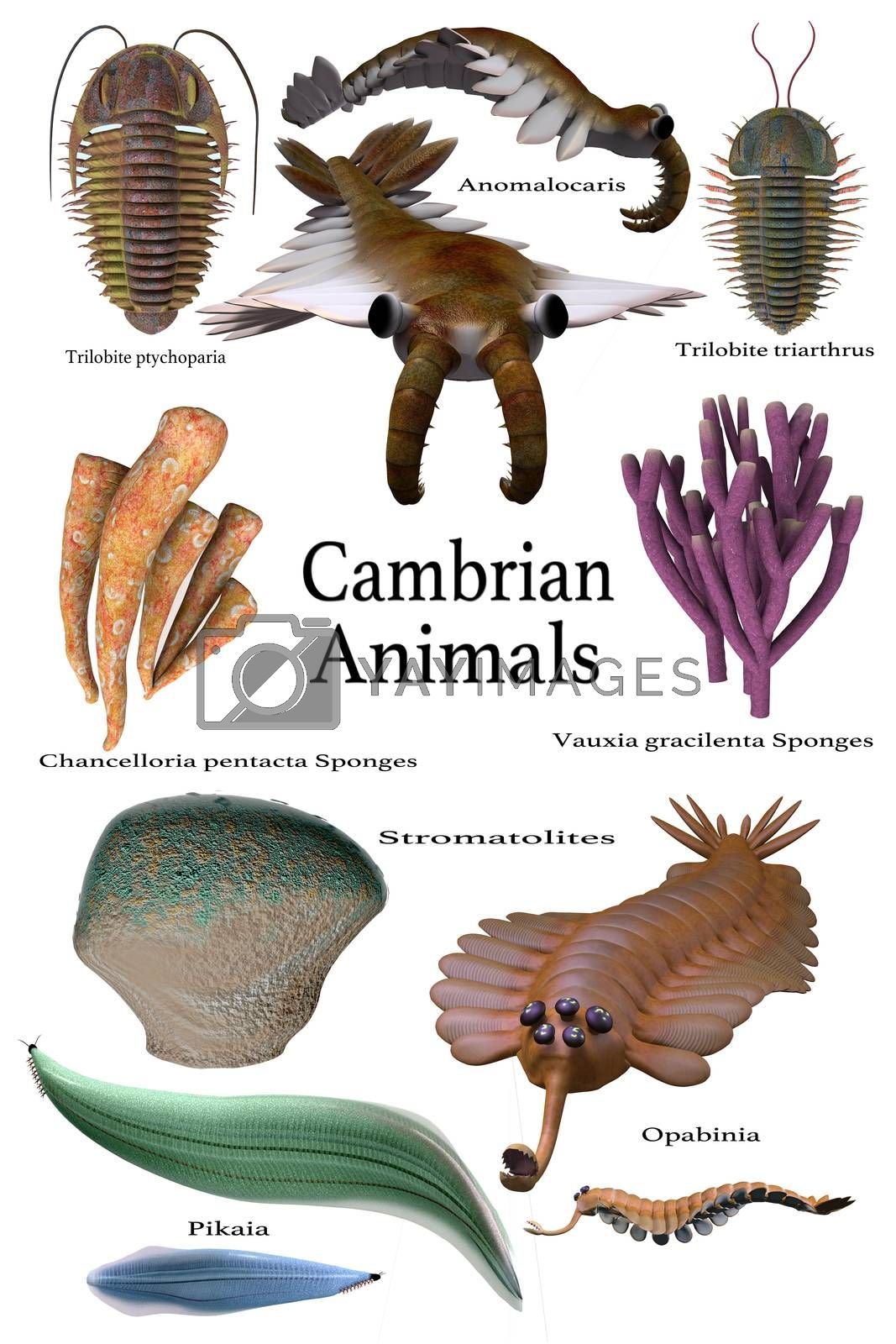 An assortment of some of the animals, sponges and microbes of the Cambrian seas of Earth's history.