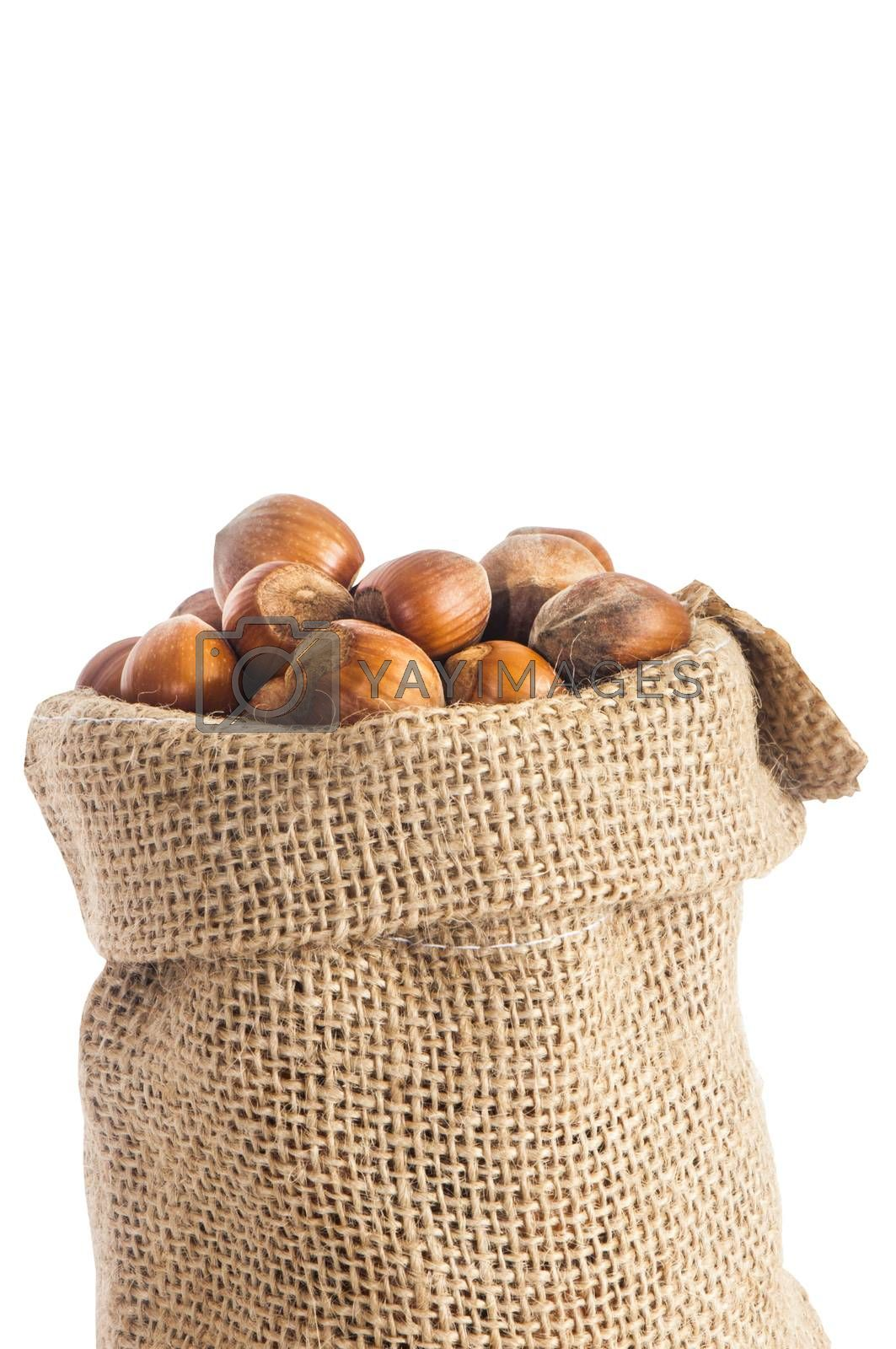 some hazelnuts placed over a white background