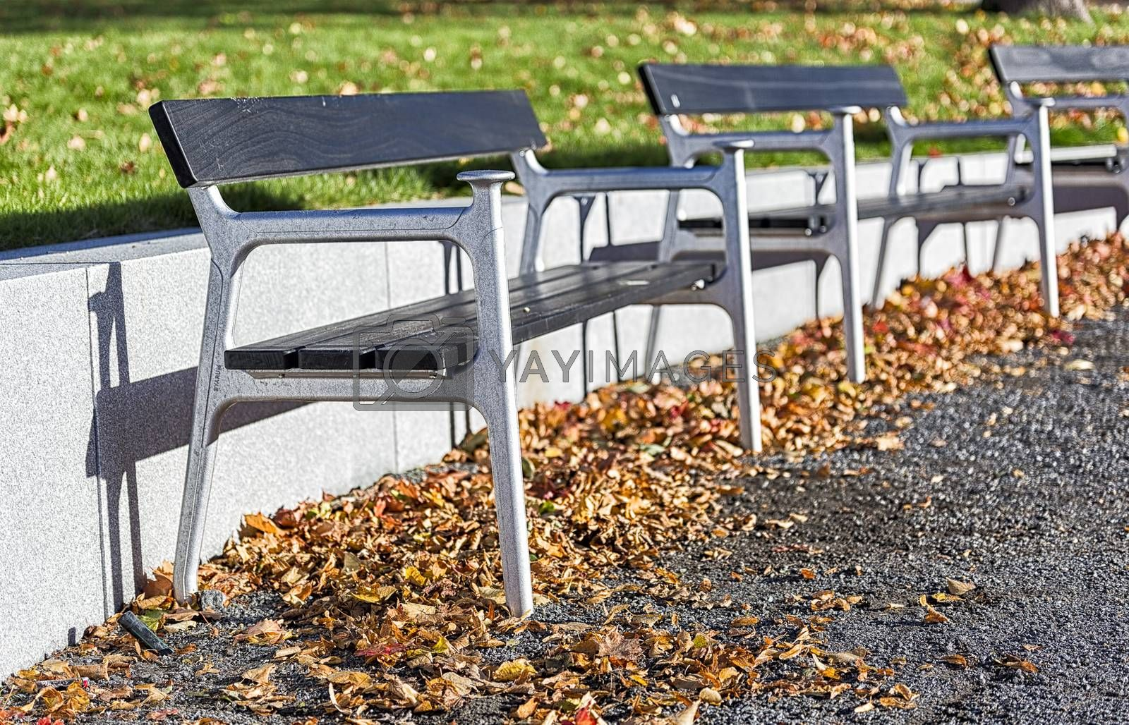 Benches in Autumn Leafes.