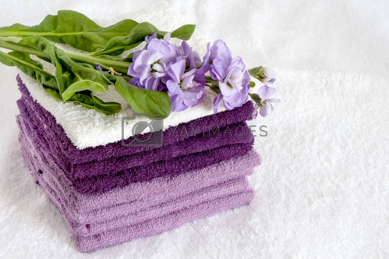 a terry towels on  a white background
