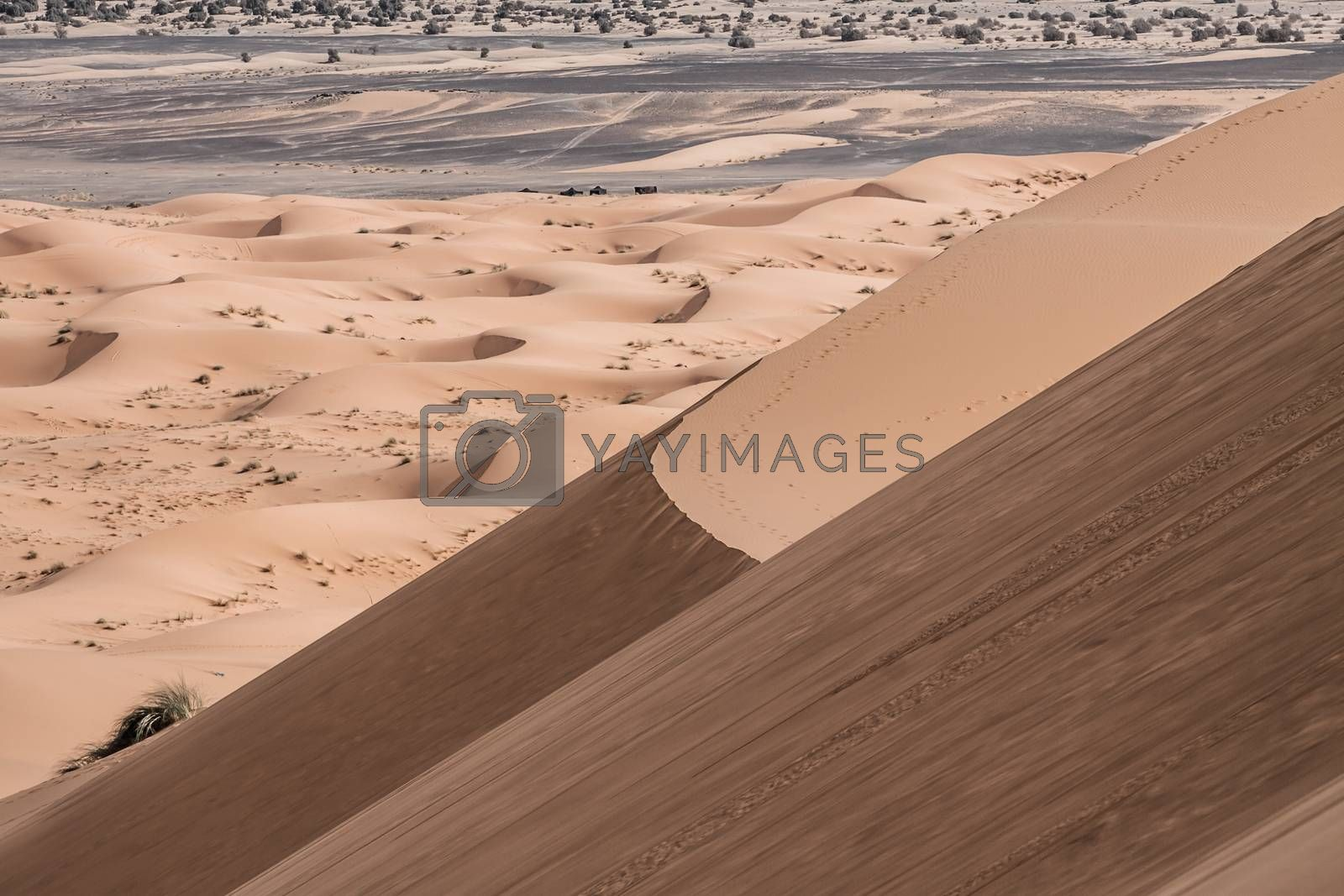 Sand dunes at sunset in the Sahara  in Morocco ( HDR image )