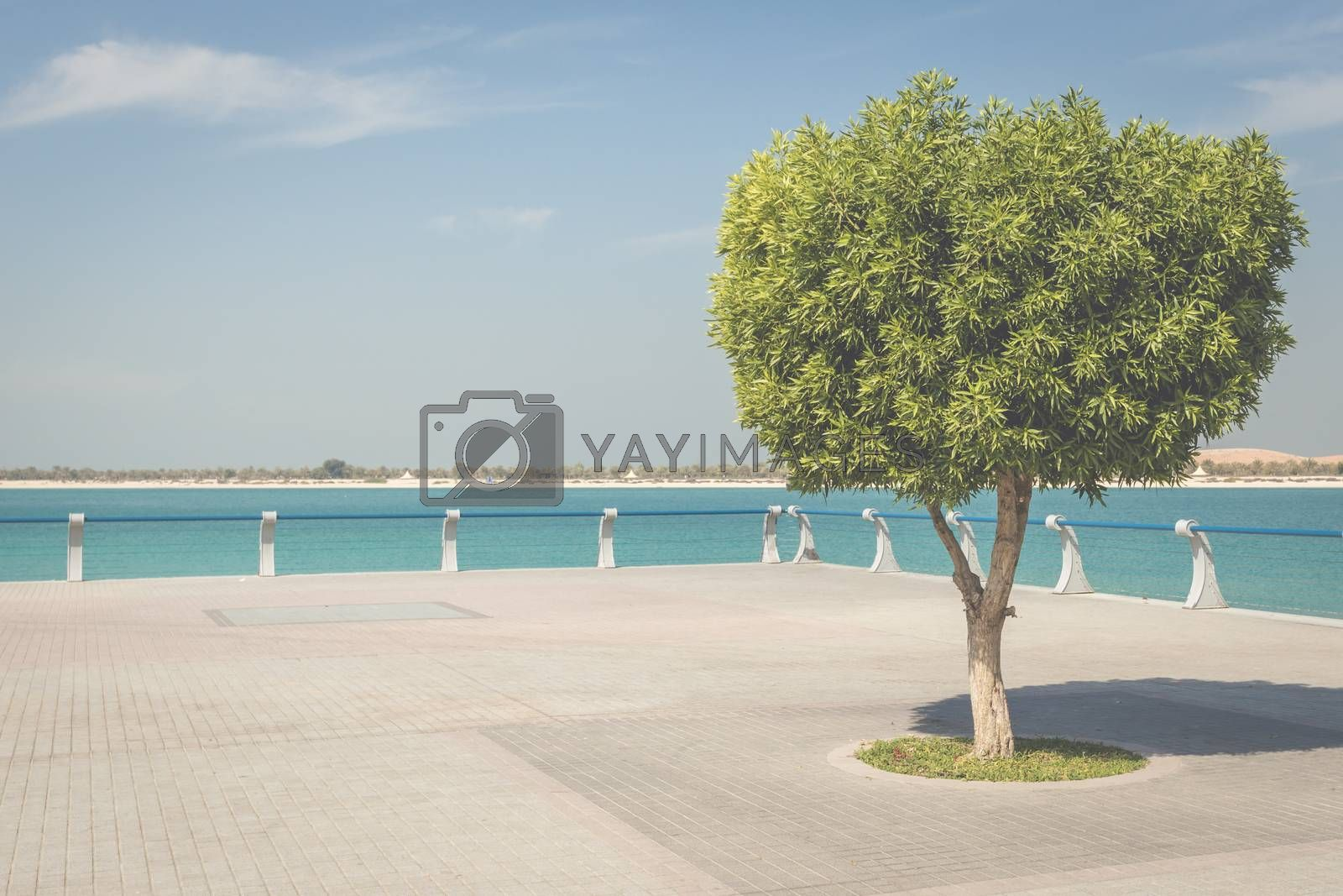 Seafront against the backdrop of Abu Dhabi