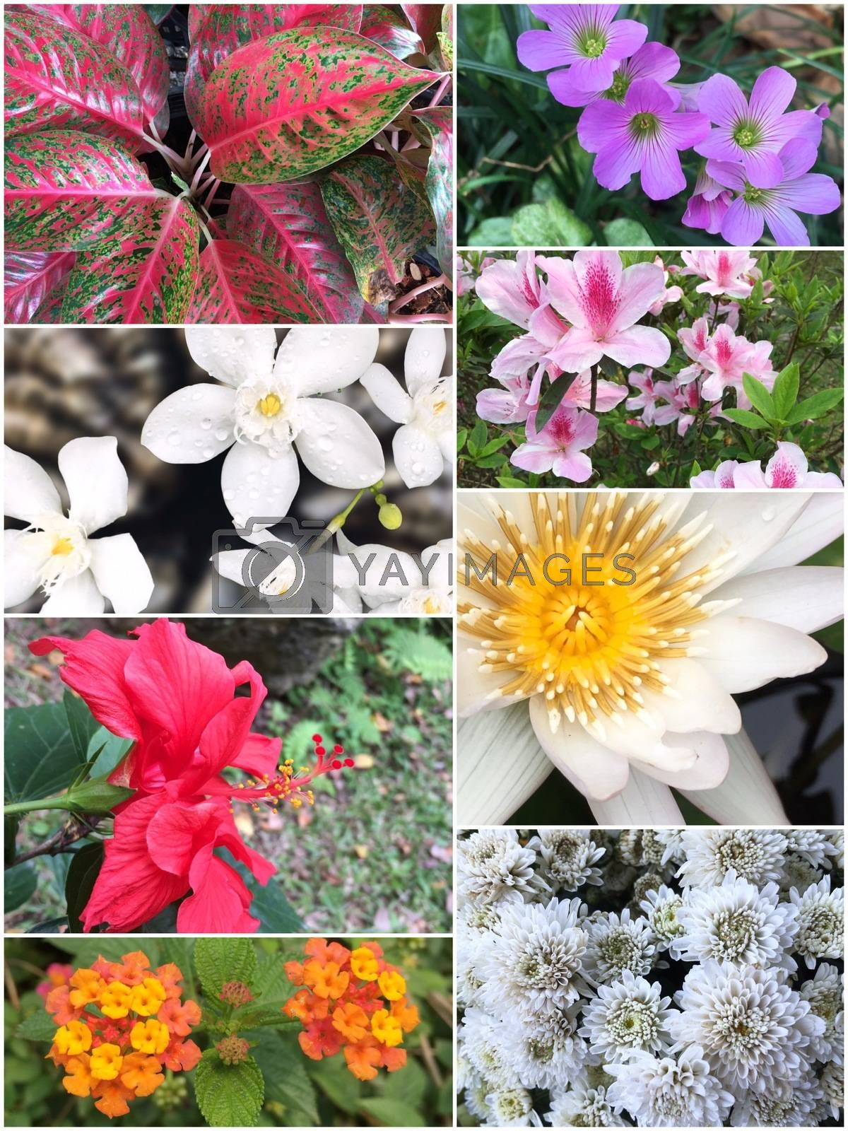 Collage of Beautiful variety of colorful flowers and plants as background