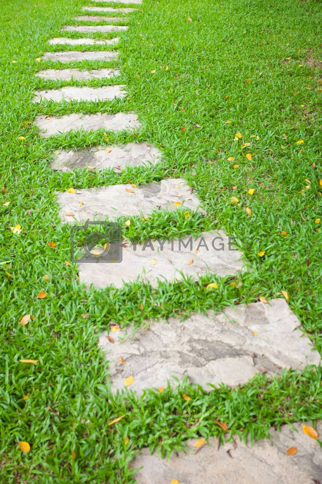 The Stone block walk path in green grass background
