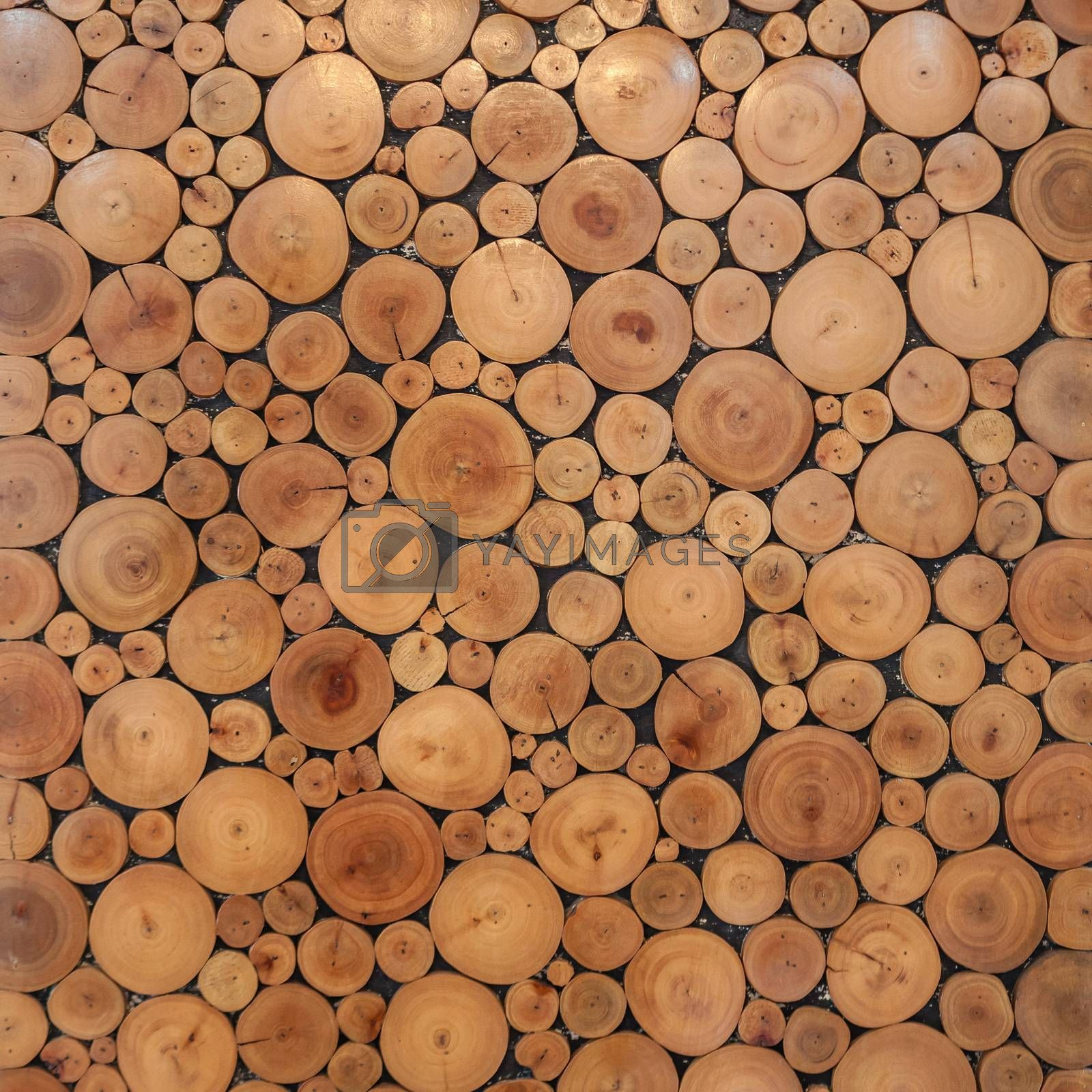 tree wood brown circle stumps as background