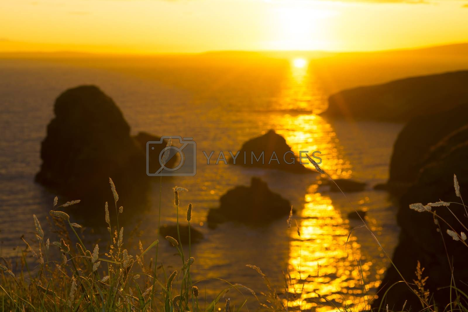 beautiful sunset over the virgin rock with wild tall grass on the wild atlantic way
