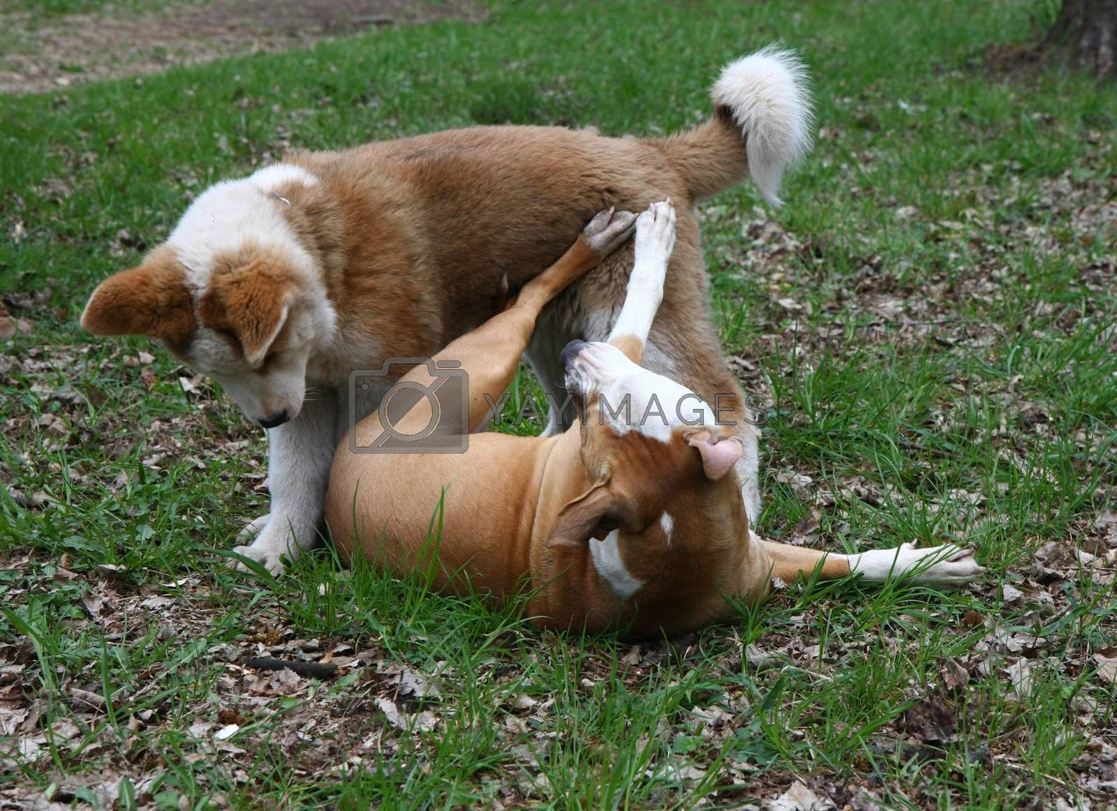 Cute puppies enjoying and playing in public park