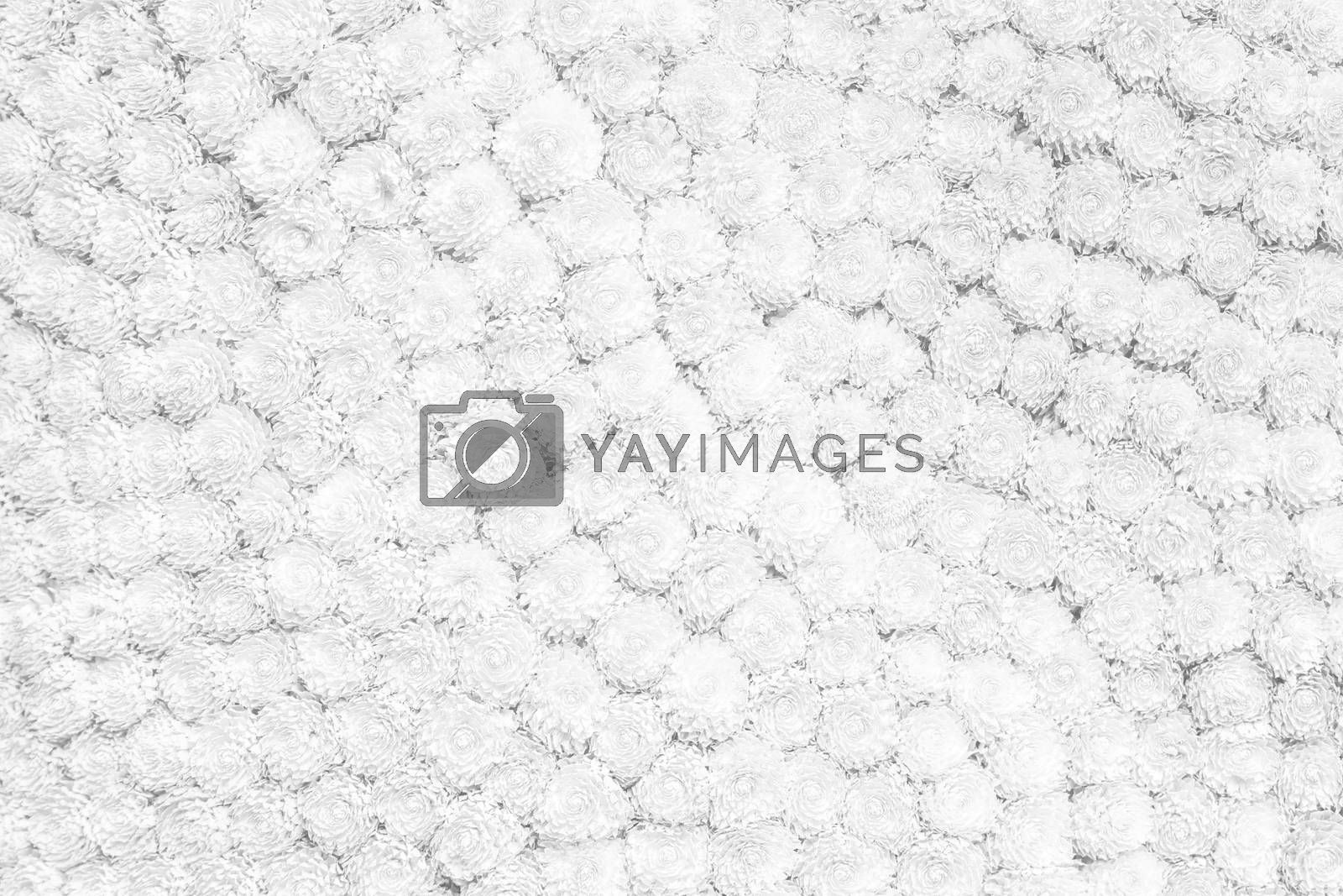 White background texture of flowers
