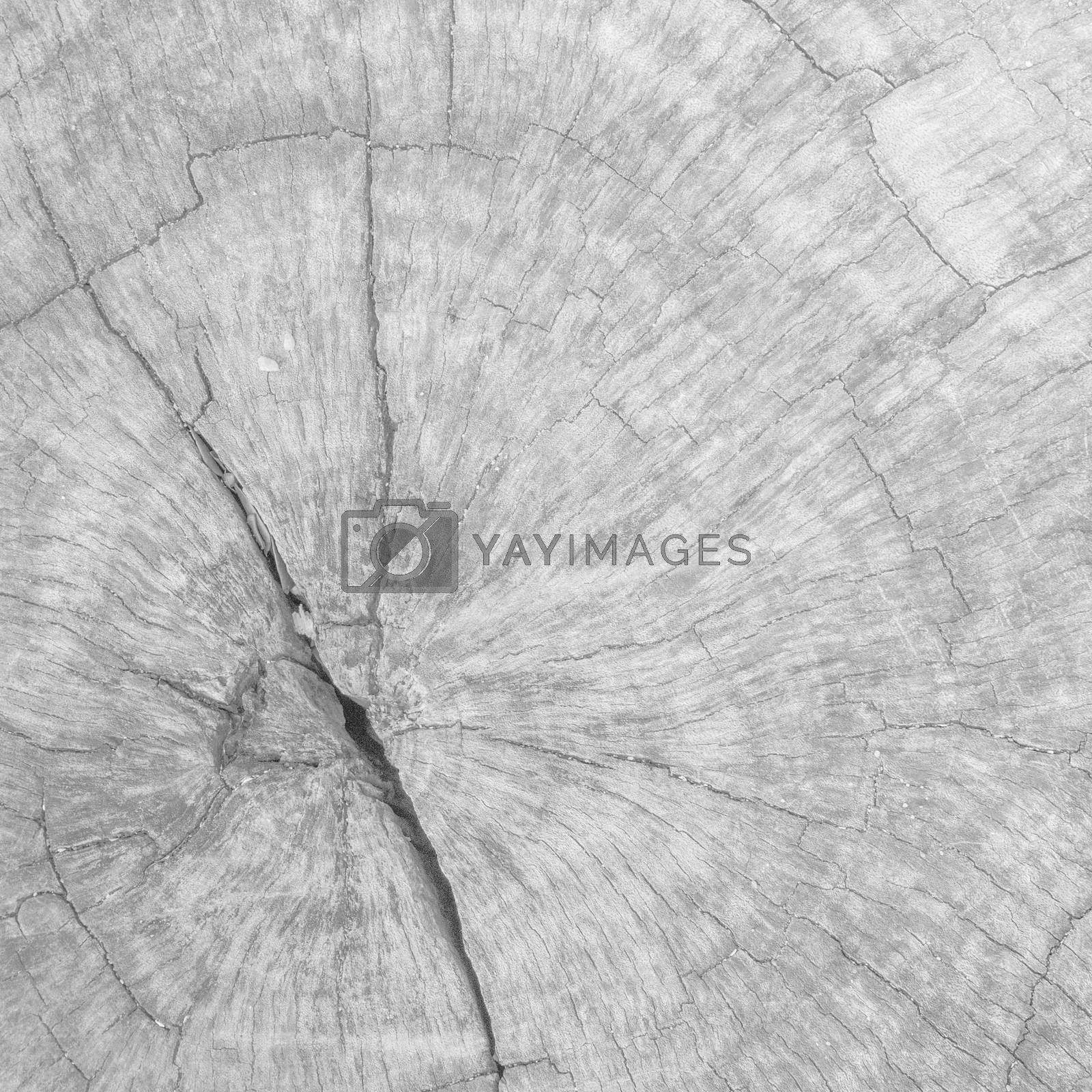 White background texture of wood