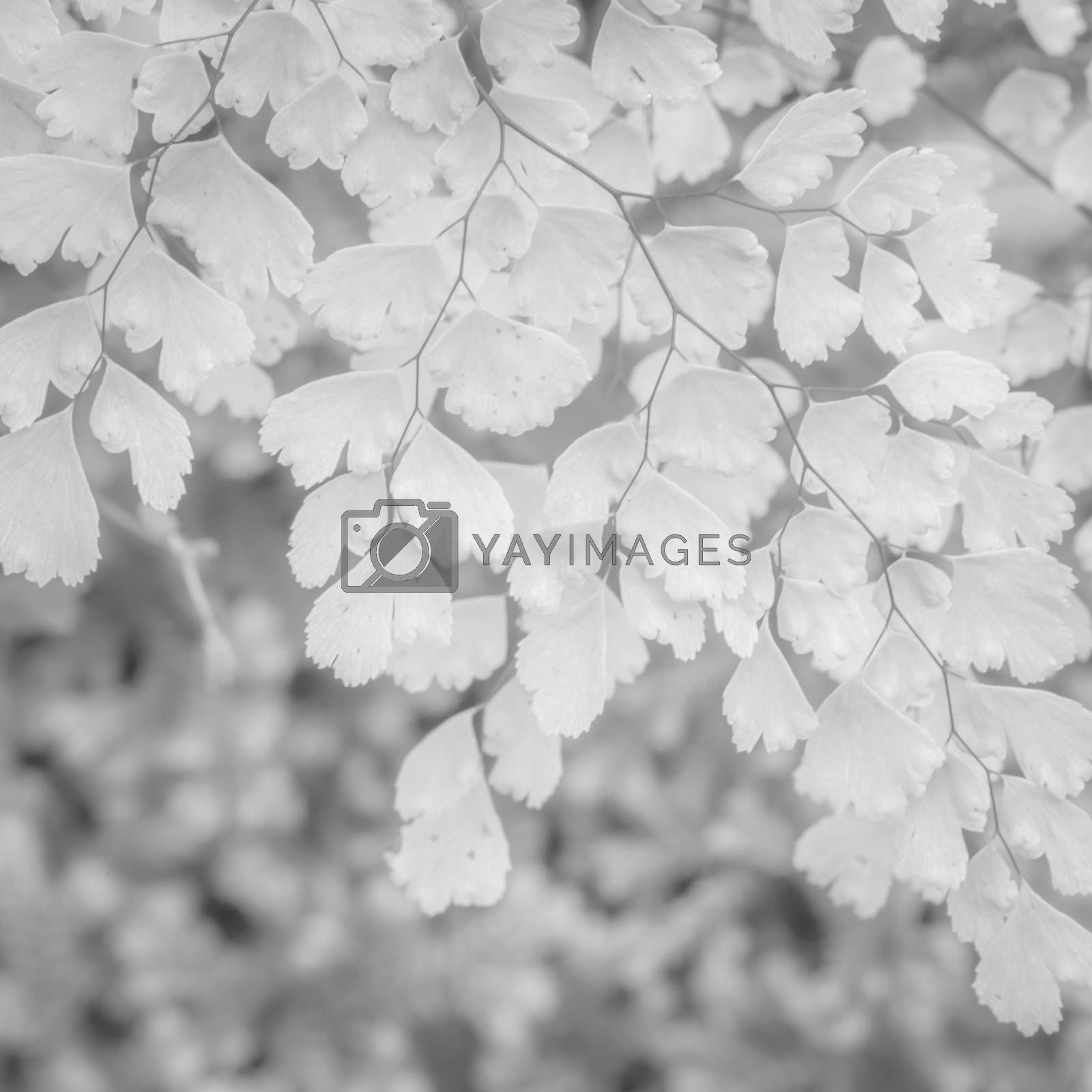 White background texture of Ornamental plants