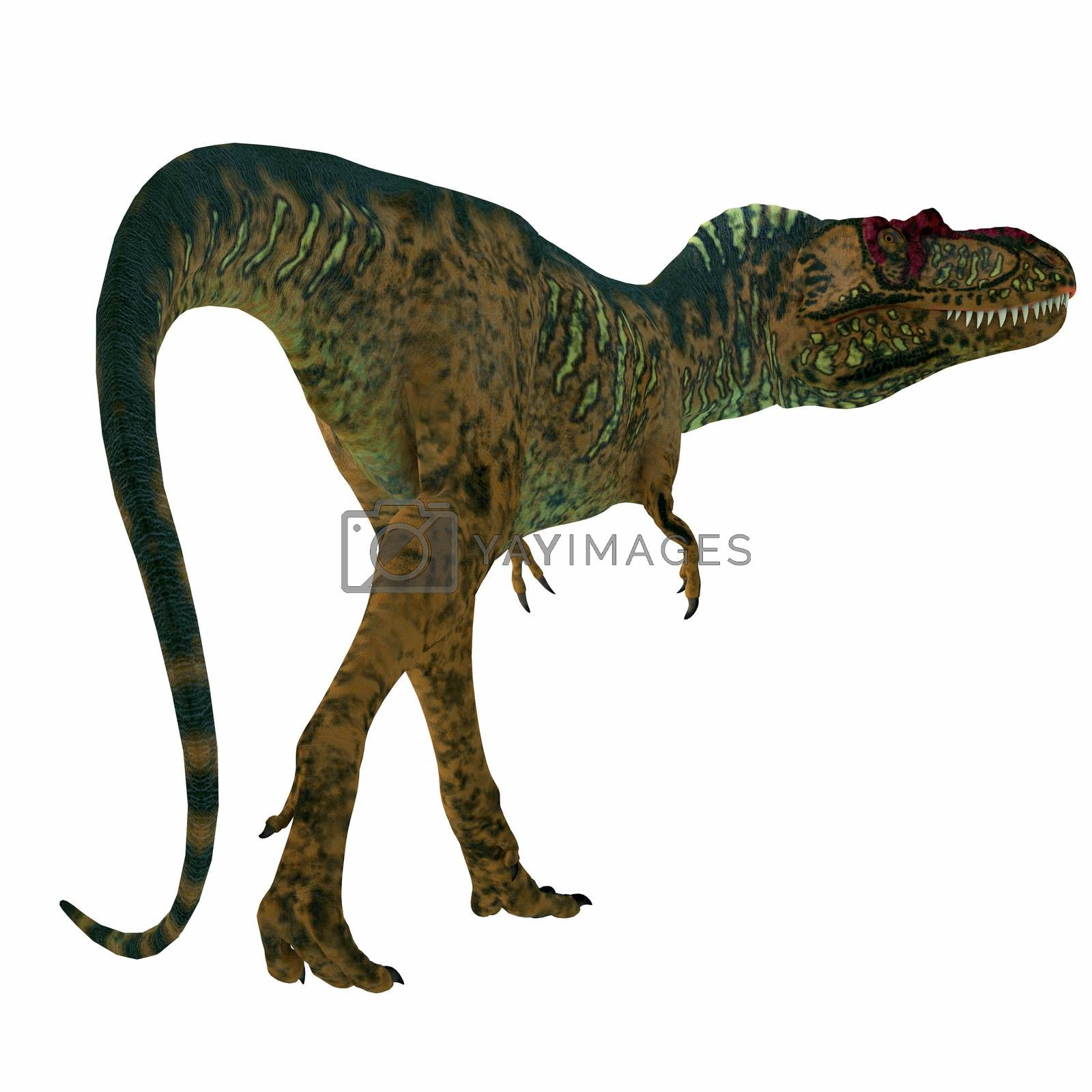 Albertosaurus was a carnivorous theropod dinosaur that lived in North America in the Cretaceous Period.