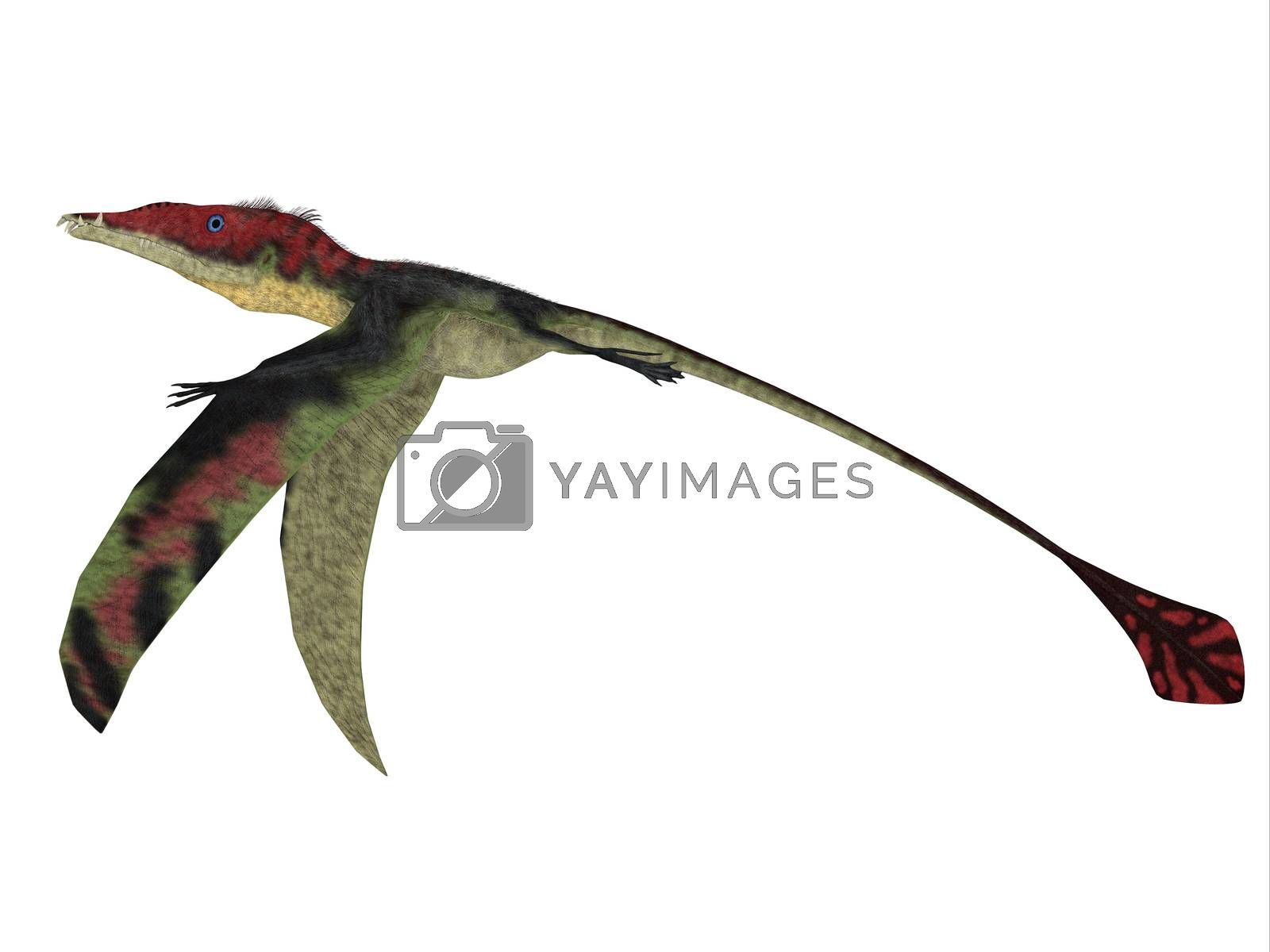 The carnivorous Eadimorphodon was a pterosaur flying reptile that lived in Italy in the Triassic Period.