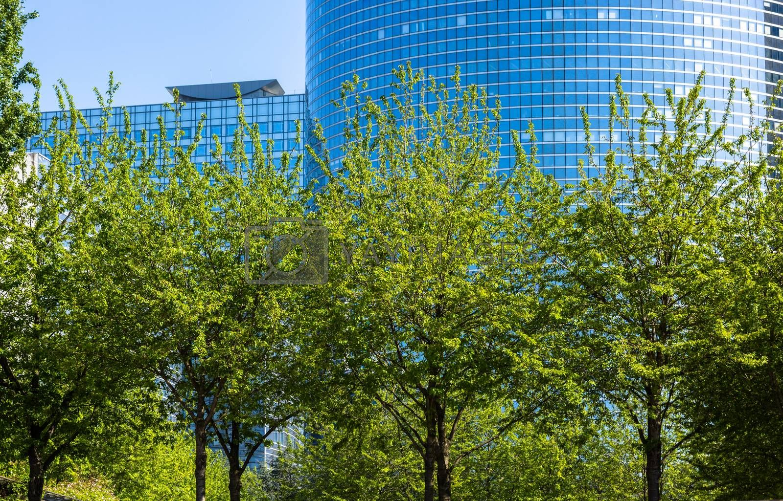 Tall grown trees in front of high office glass building with plenty partitioning