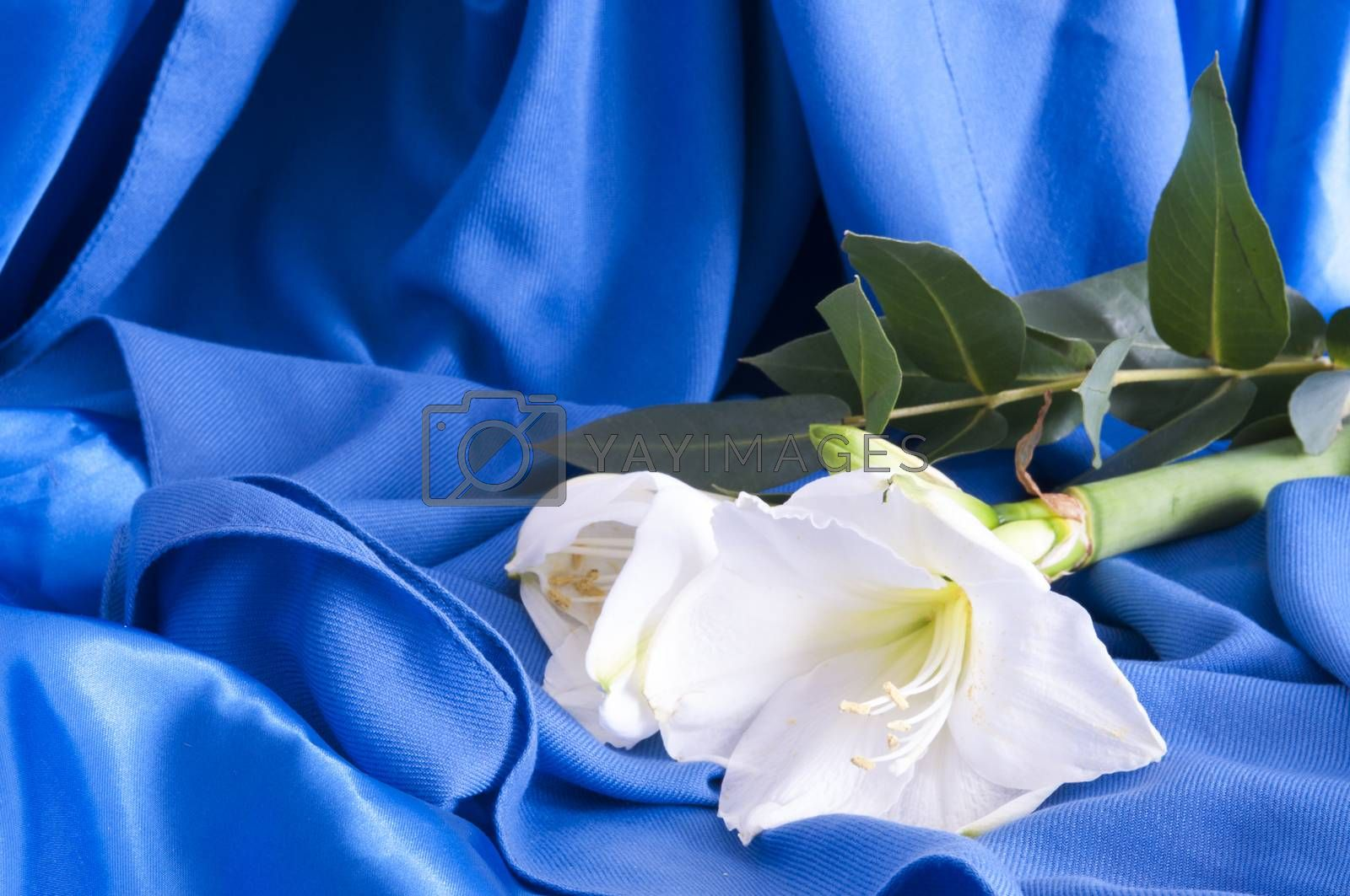 a composition of flowers for a wedding