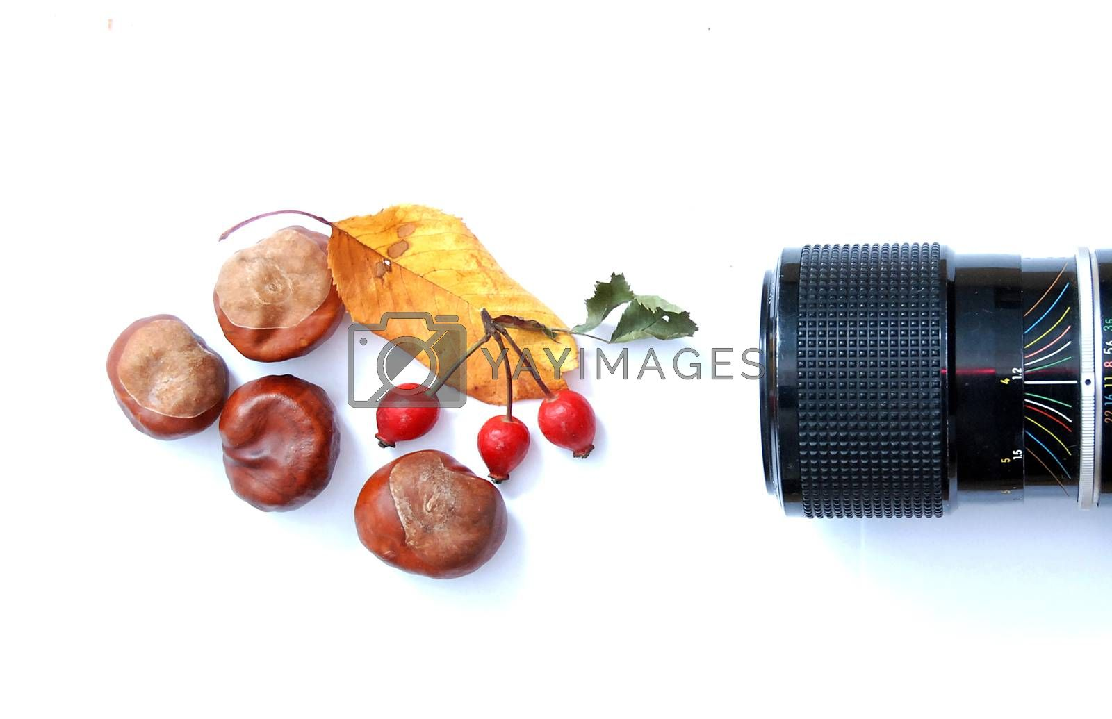 Royalty free image of horse chestnut, camera lens, leaf and rose hips by nehru