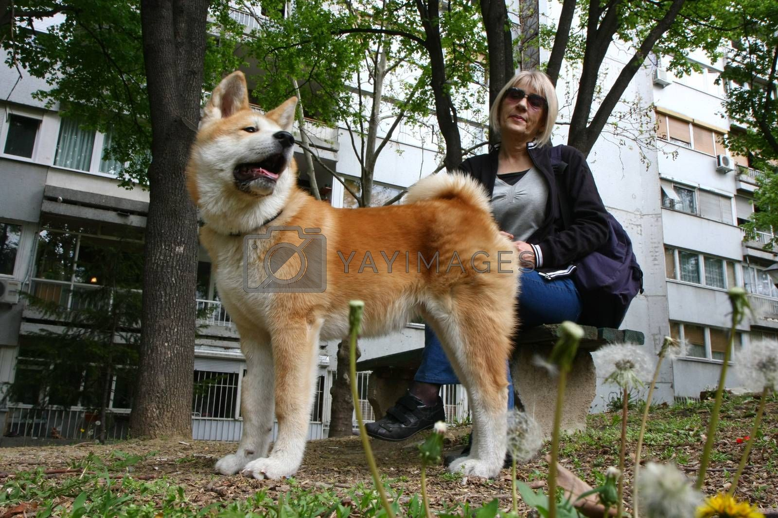 Lady and Akita Inu puppy resting on the bench