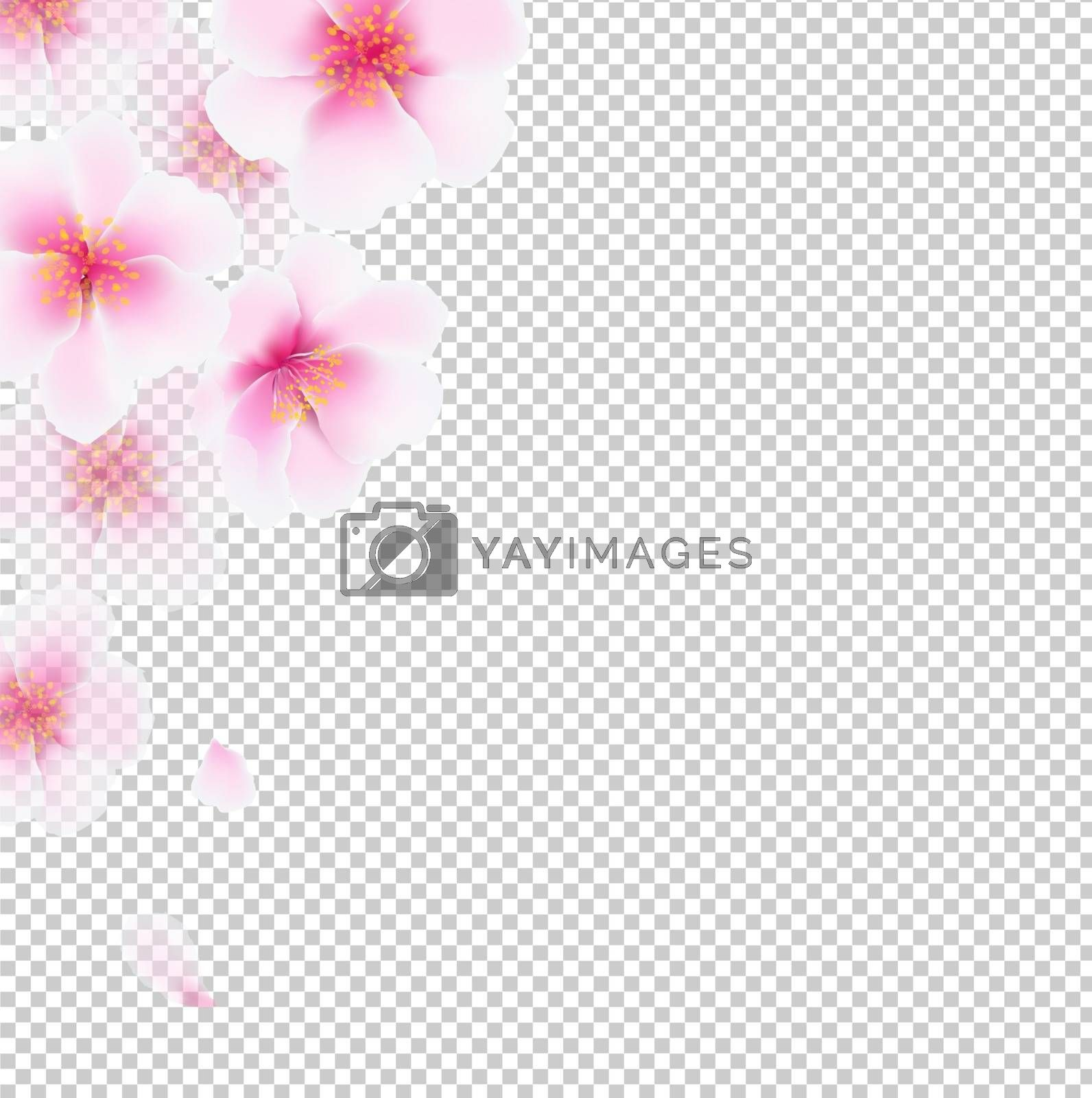 Cherry Flowers Isolated With Gradient Mesh, Vector Illustration