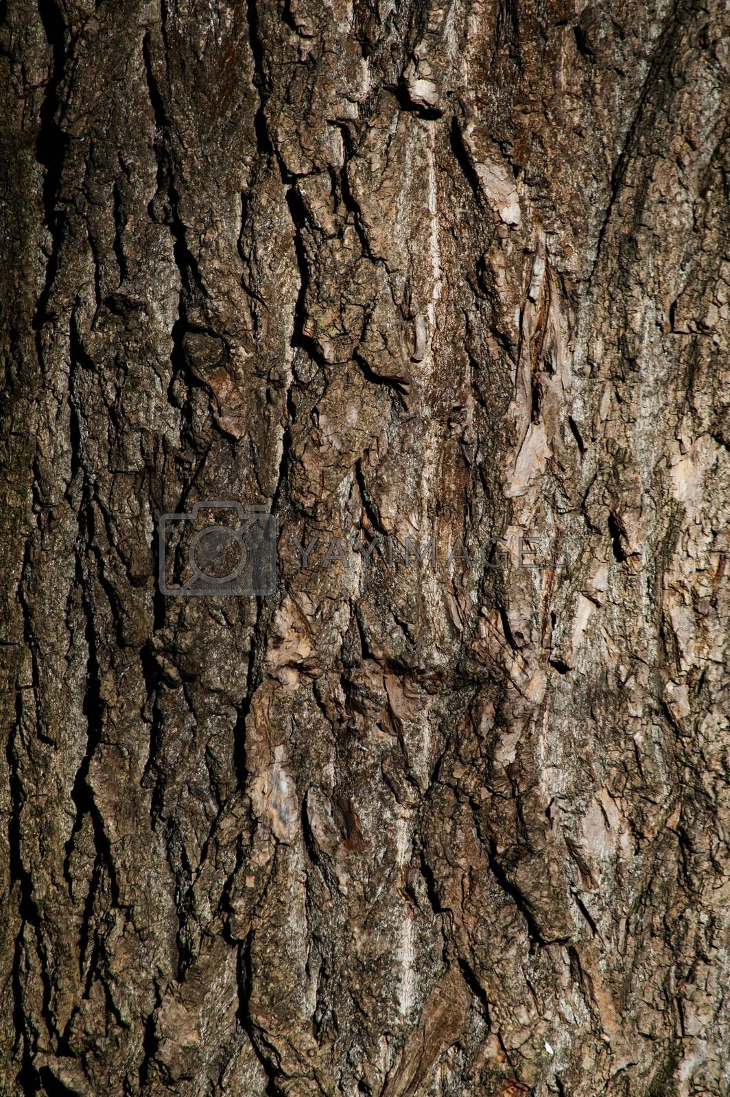 Background from the texture of the tree..