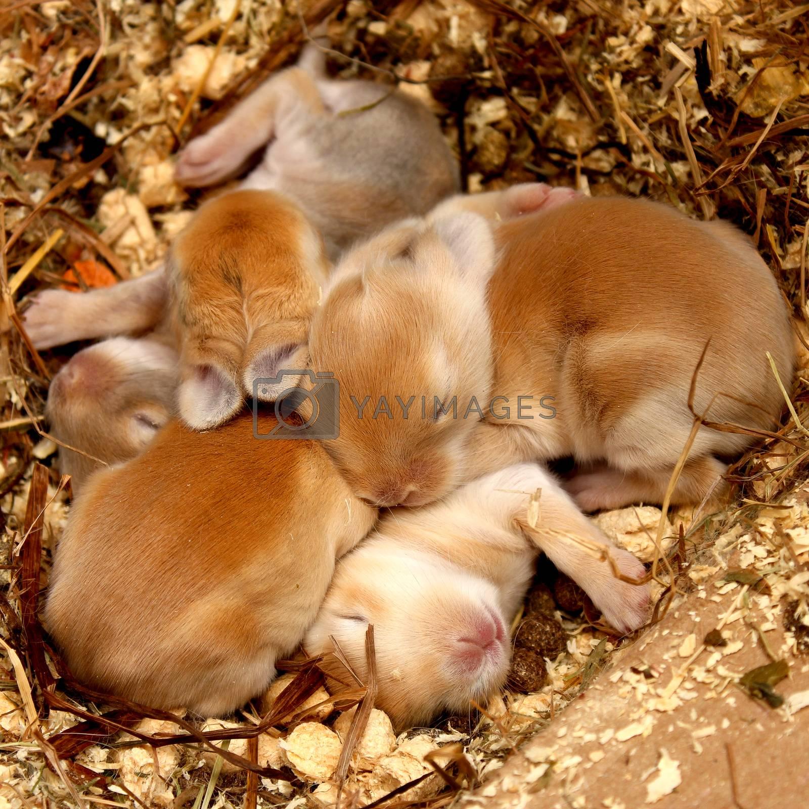 Little rabbit babies sleeping together. Cute pets