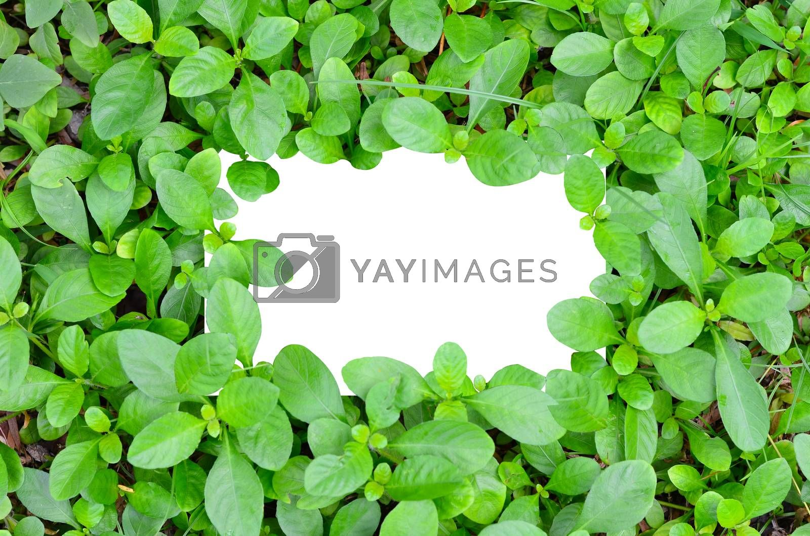 White paper on green leaf background