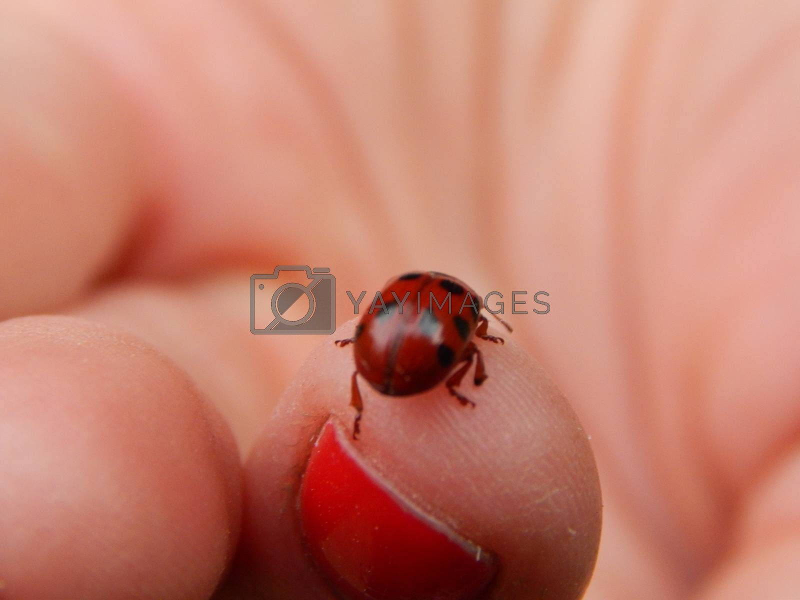 Beetles on hand and fingers
