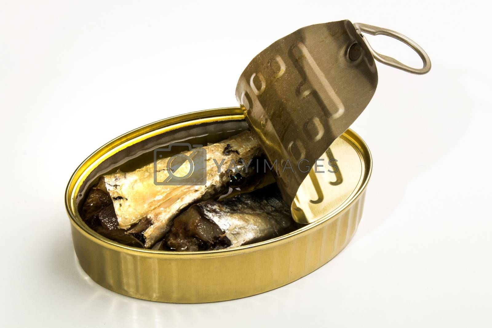 canned sardines in oil, isolated on white background