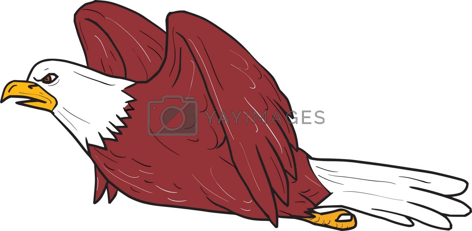 Illustration of a bald eagle flying viewed from the side set on isolated white background done in cartoon style.