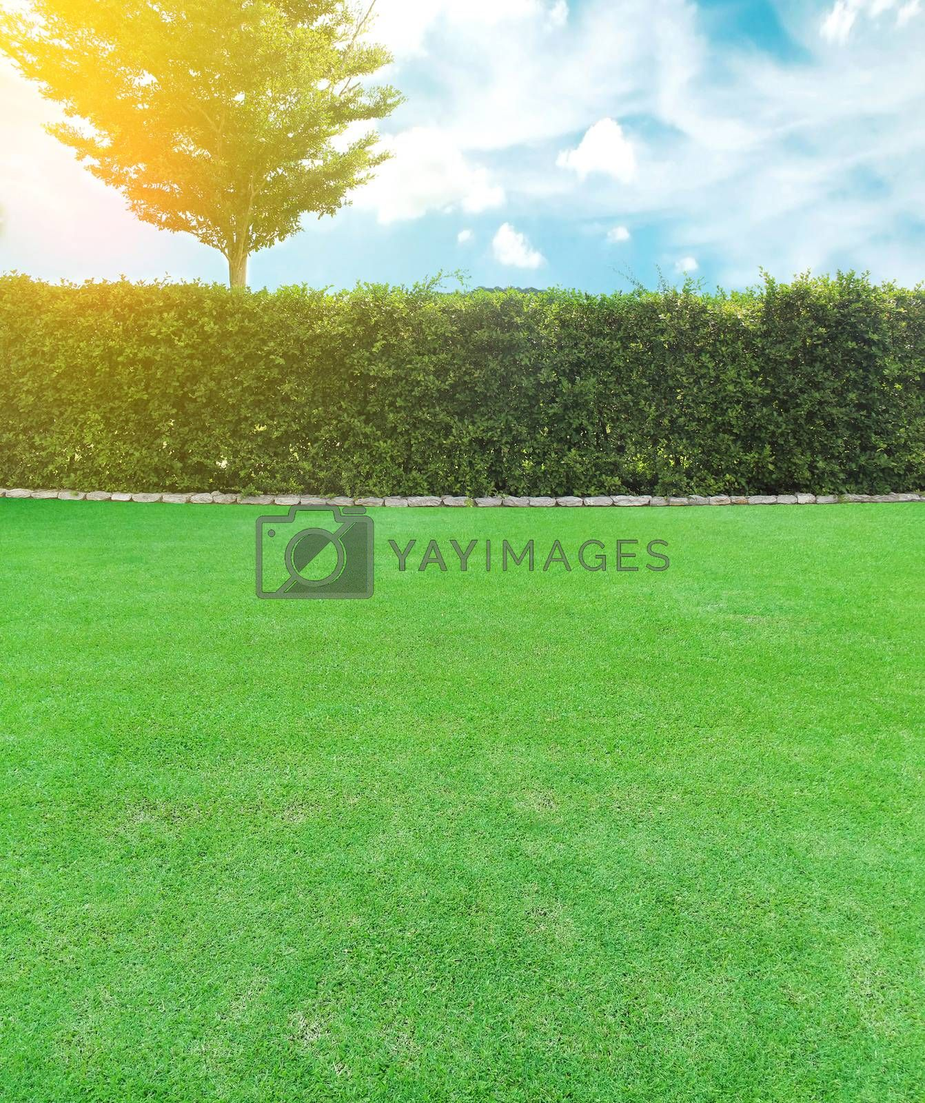Grown tree with brick wall and lawn field with burst light
