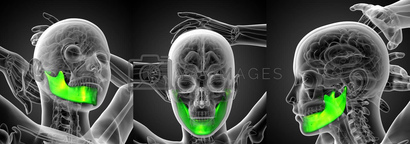 3d rendering illustration of a jaw bone
