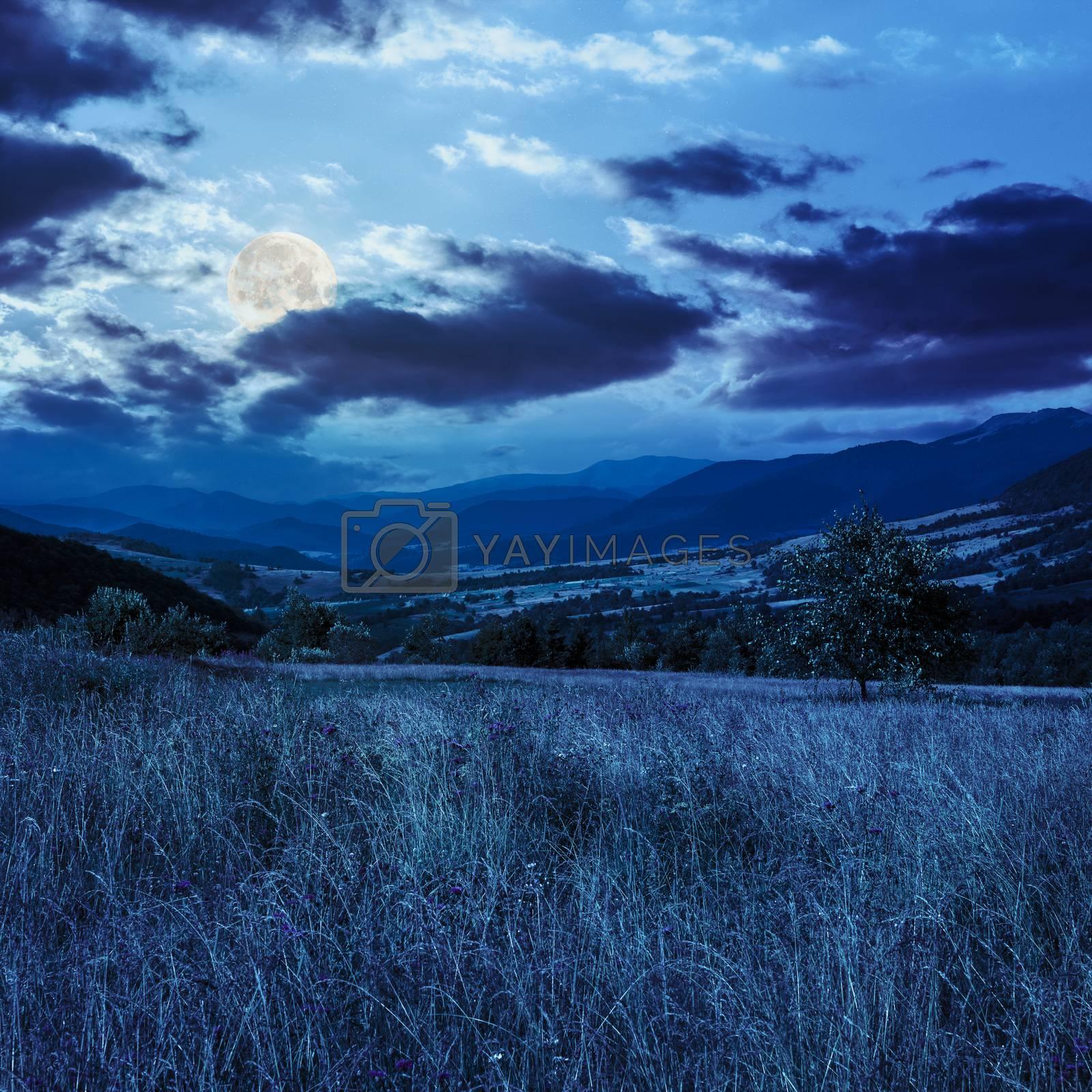 field near home at night by Pellinni