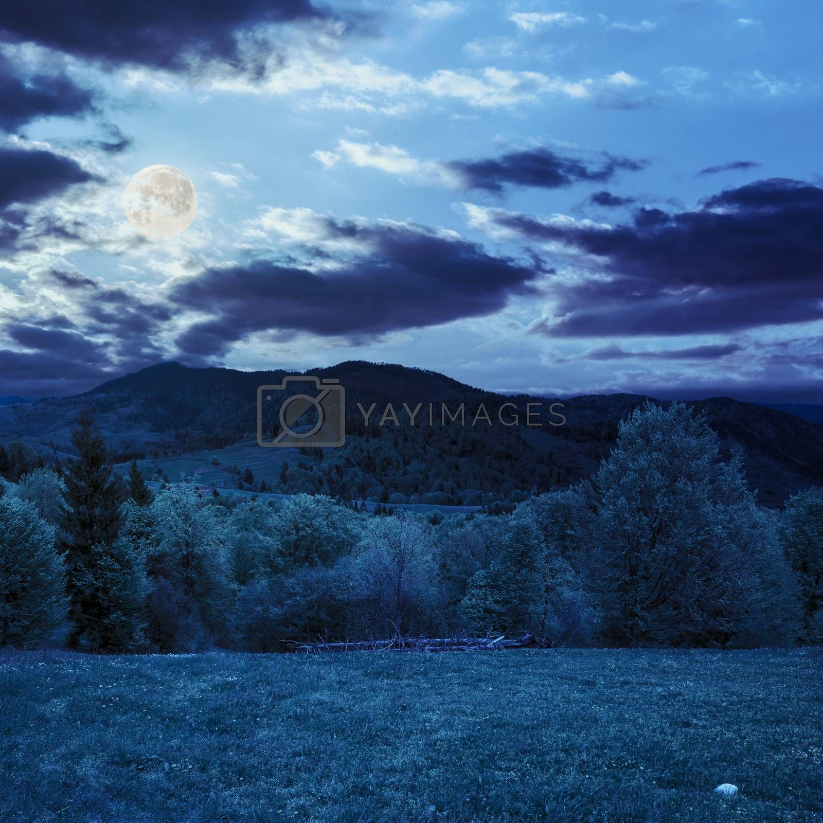 trees near valley in mountains at night by Pellinni